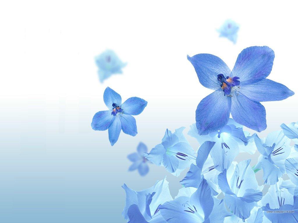 Обои, картинки Васильки - Цветы  67363