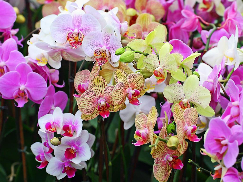 Картинки цветы орхидеи красивые