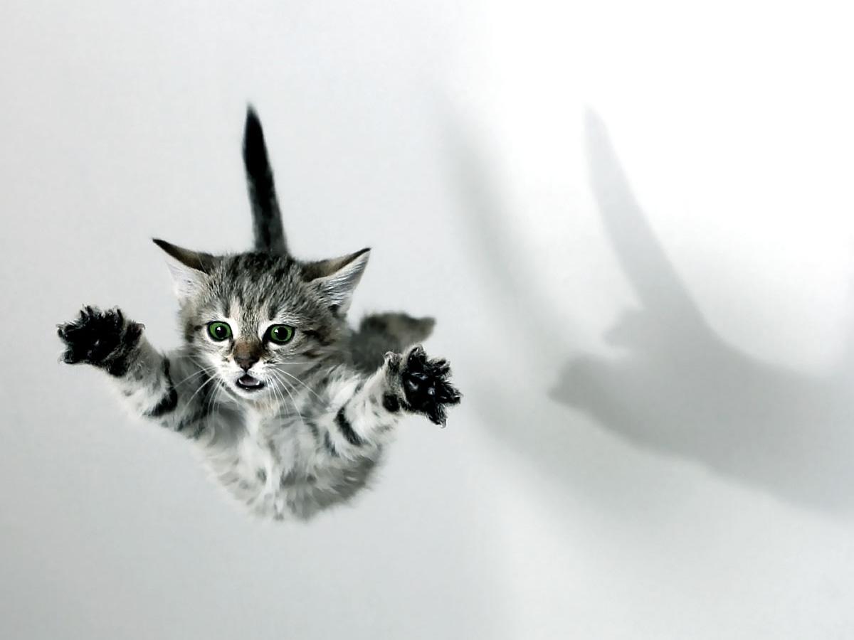 обои коты: