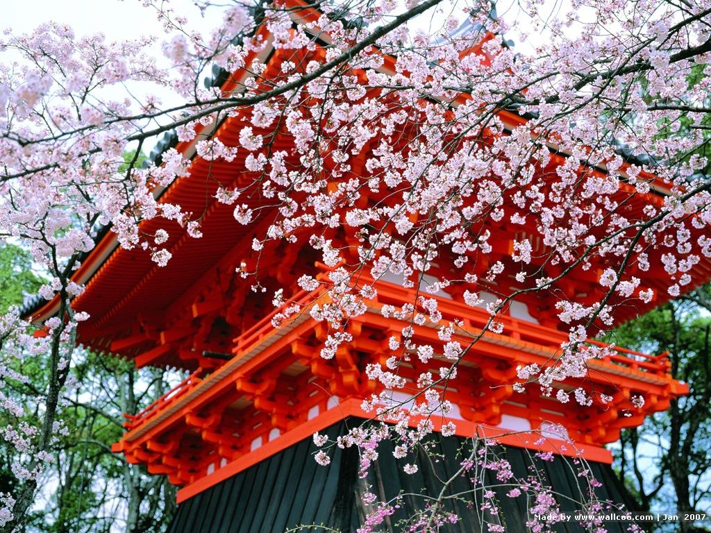 Пагода на даче фото цветущее все