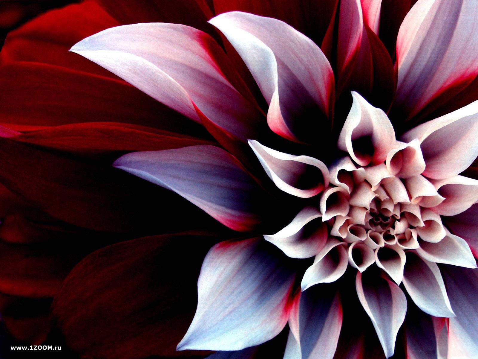 Исполняющий обязанности смотреть цветы на картинках целоваться первый раз: