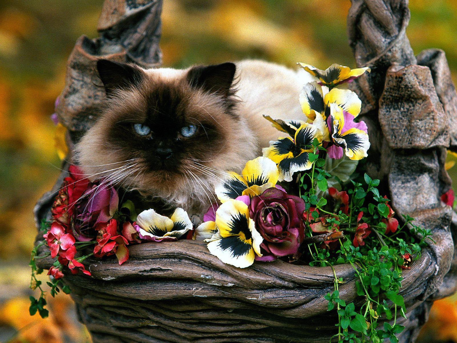 Открытки животные и цветы 68