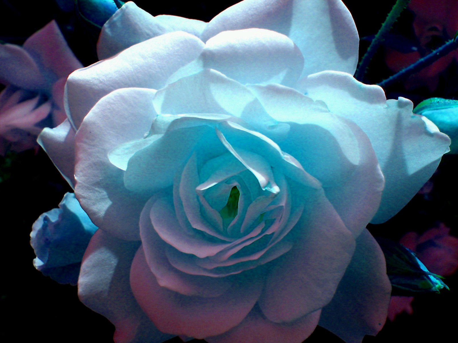 Фото самого красивого цветка на свете