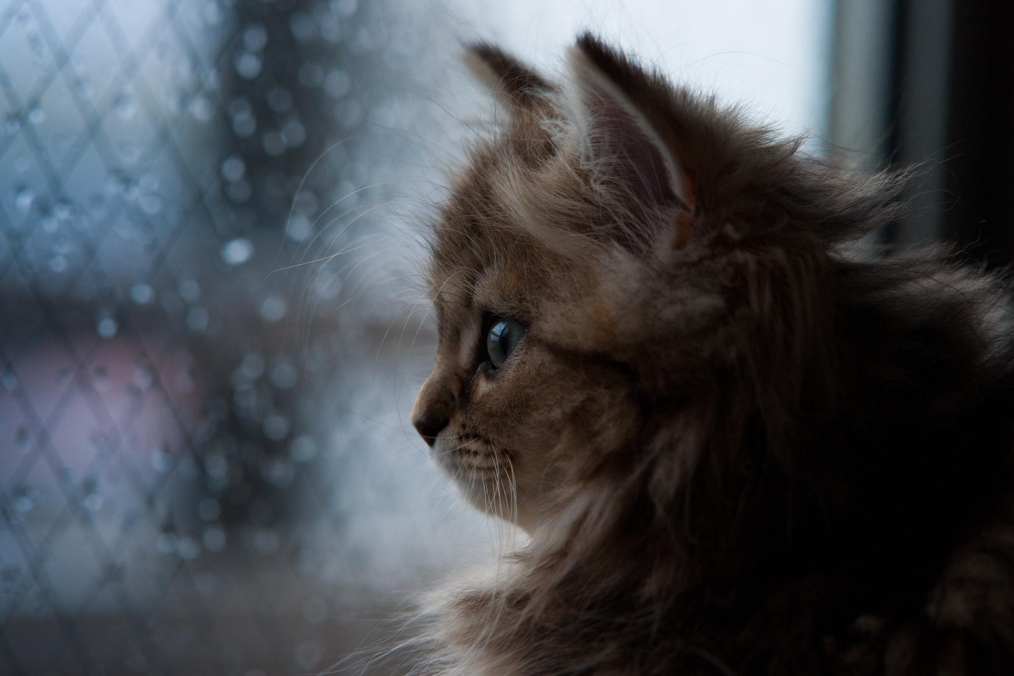 грустный кот дождь анимация без смс
