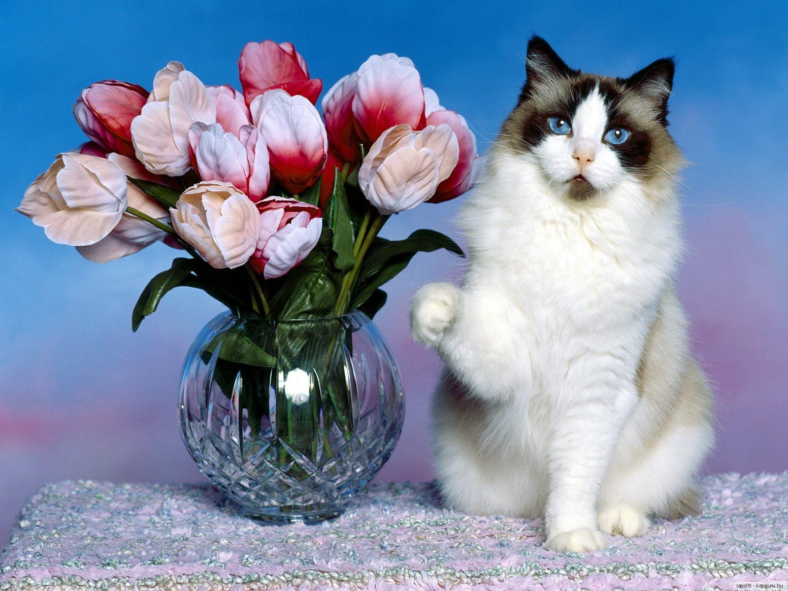 Открытка с котом и цветами