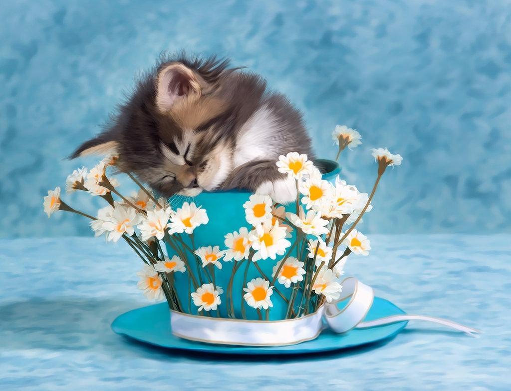 Кошка с цветами открытка с днем рождения 84