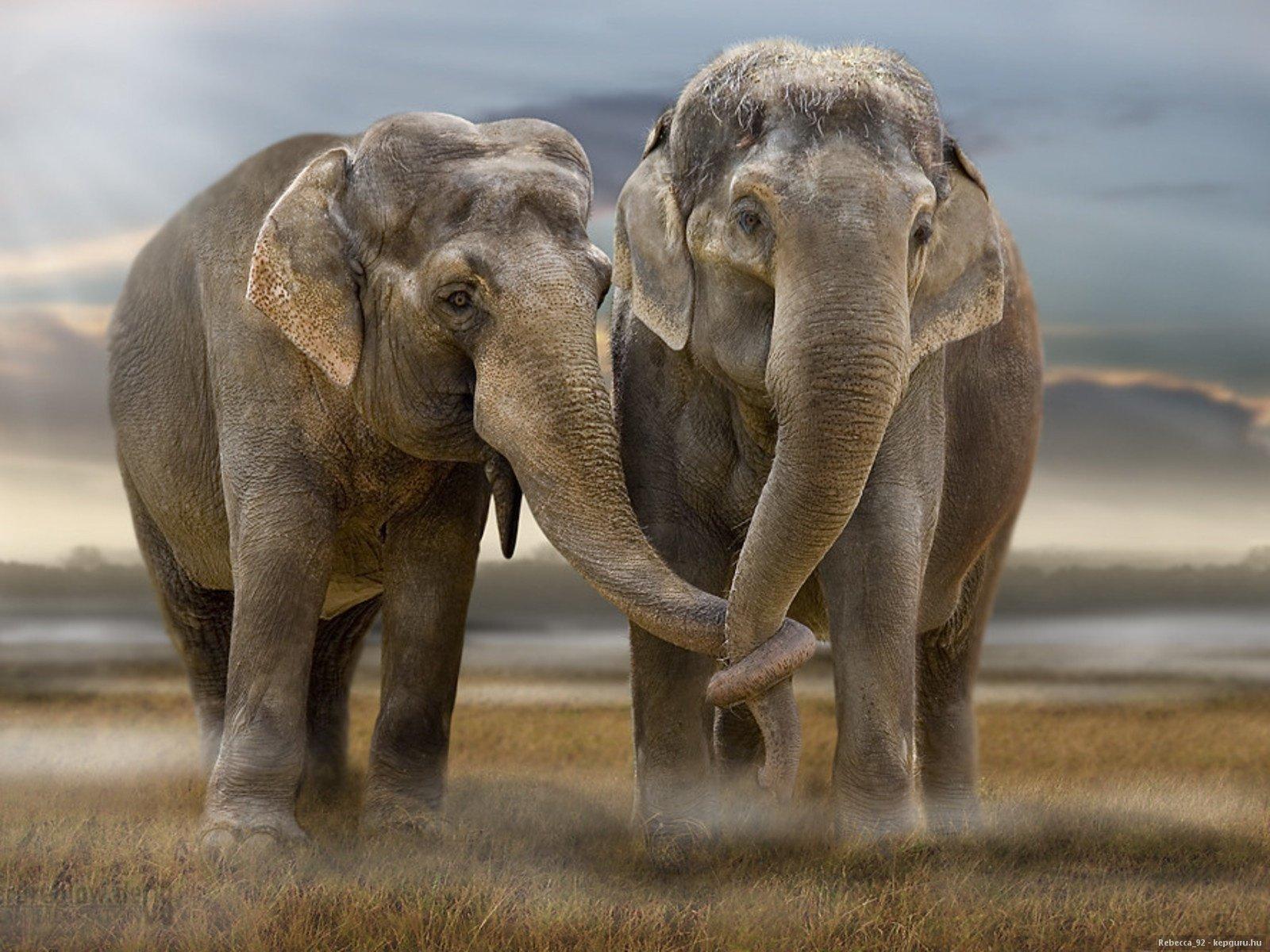 слона картинка 2