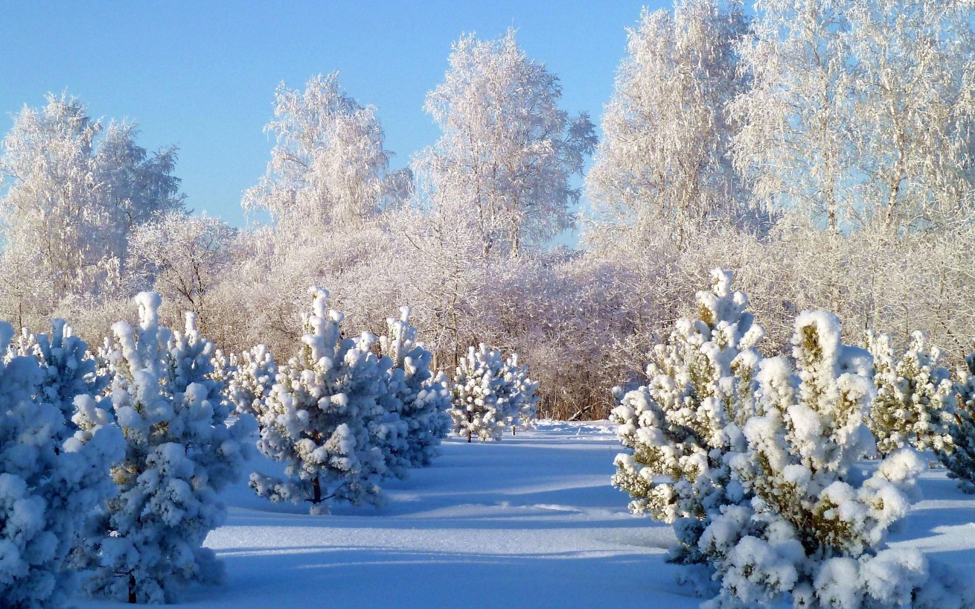 Зима Картинки На Рабочий Стол Красивые Большие