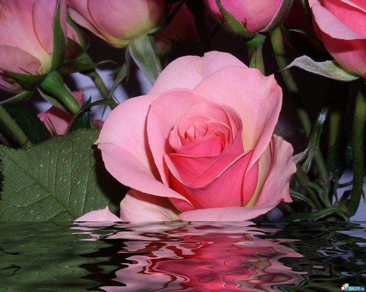 Цветы живые фото женщине