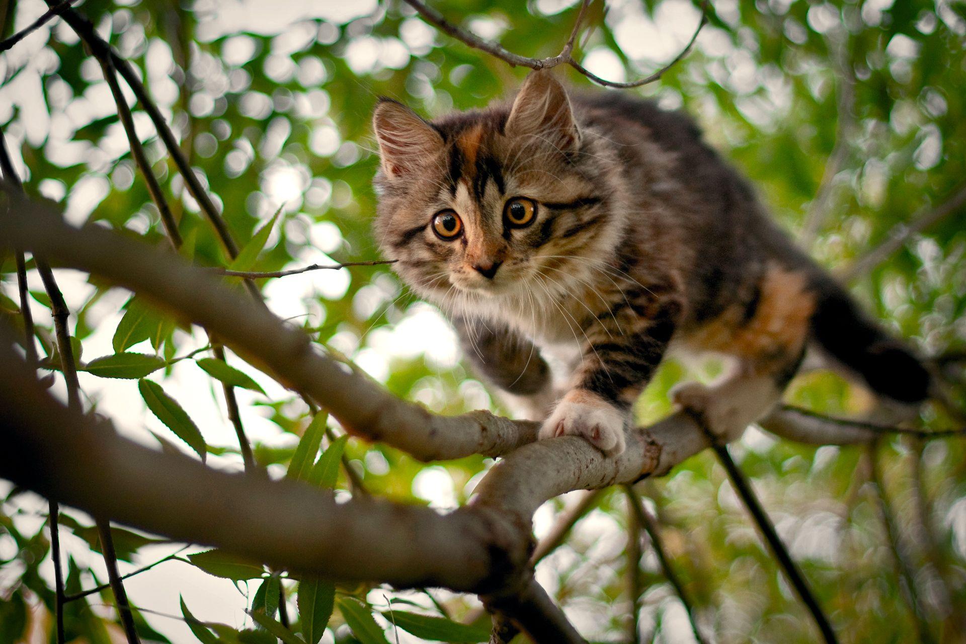 природа животные кот котенок серый журавлики nature animals cat kitten grey cranes  № 654716 загрузить