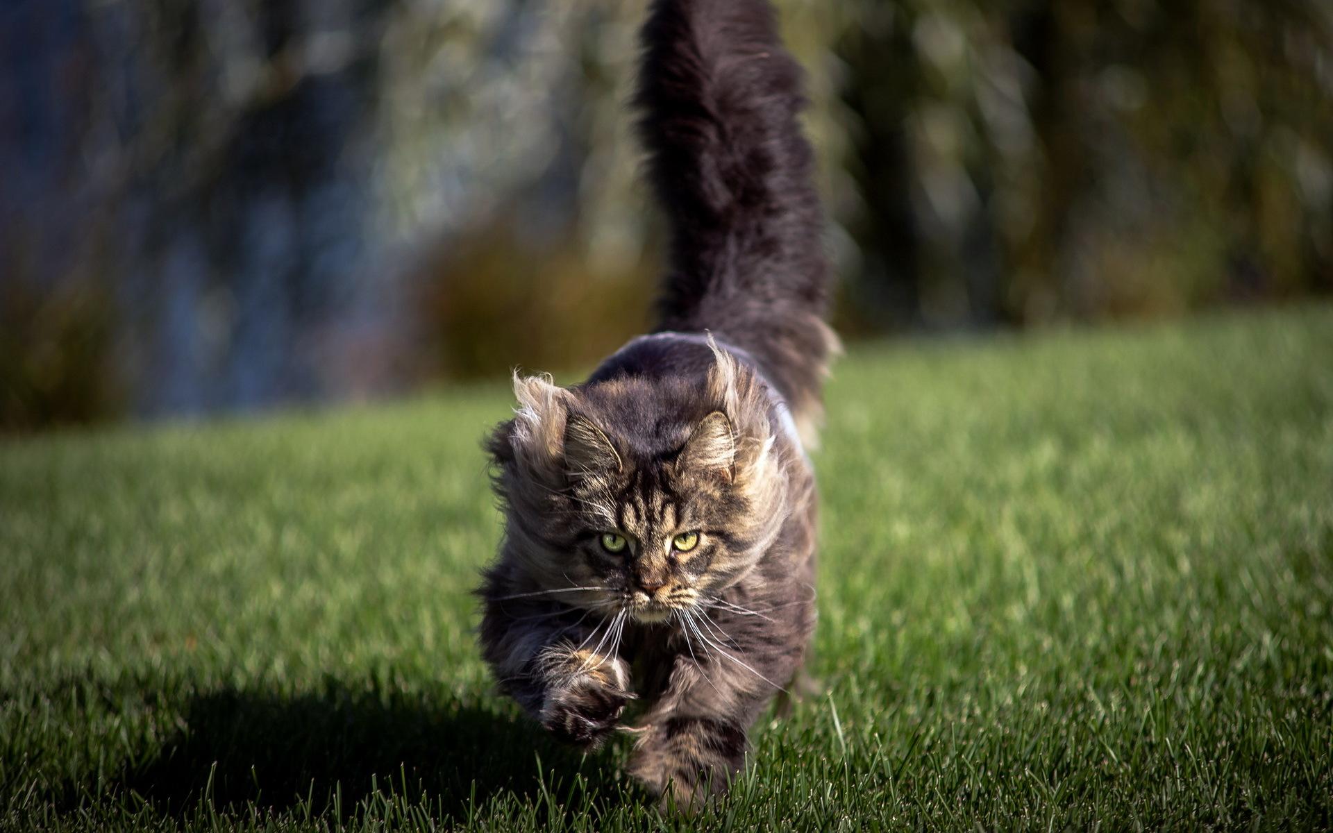 котенок хвост дыбом поле загрузить