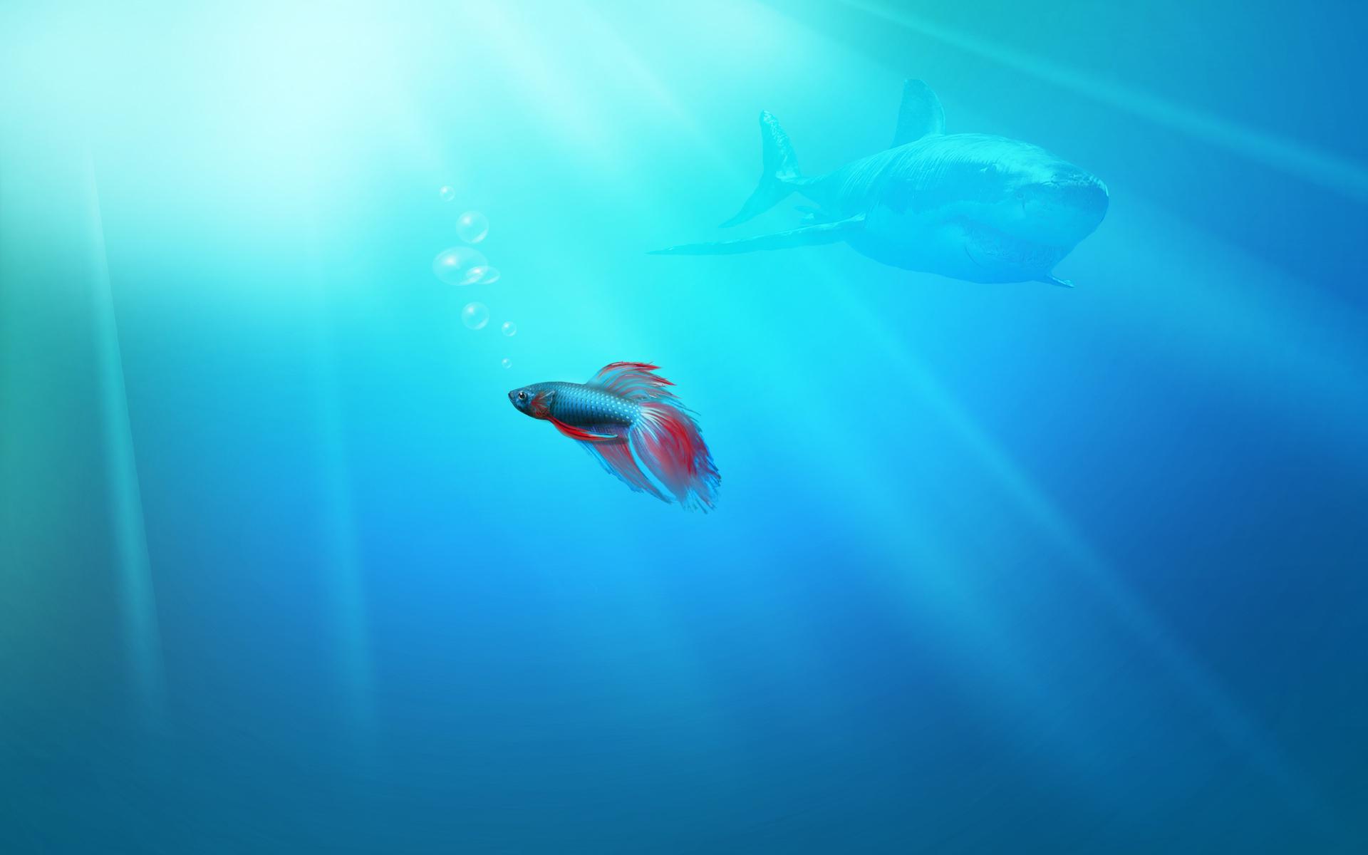Греем рыбку  № 1543158 загрузить