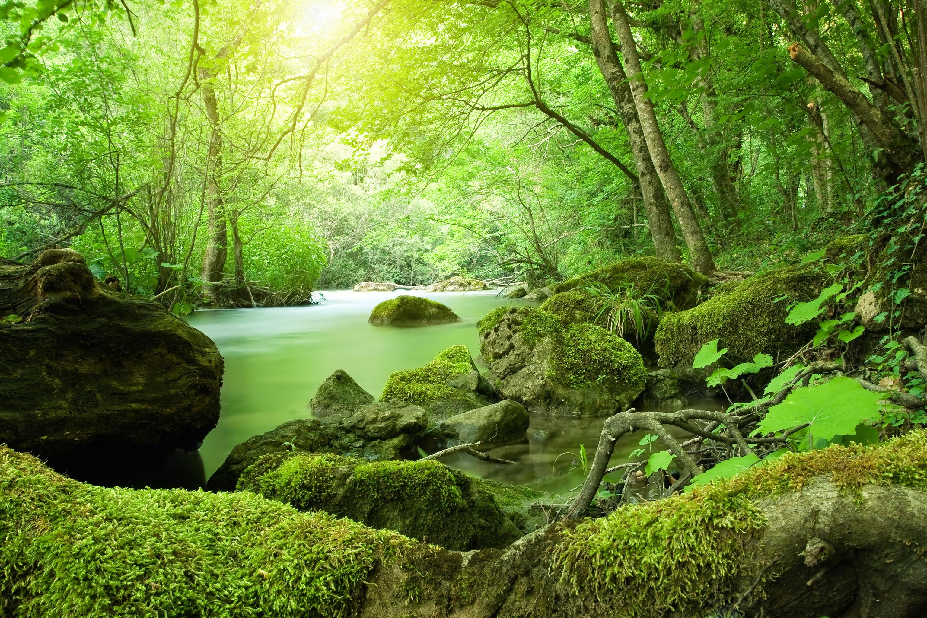 природа вода река трава деревья мох  № 3800859  скачать