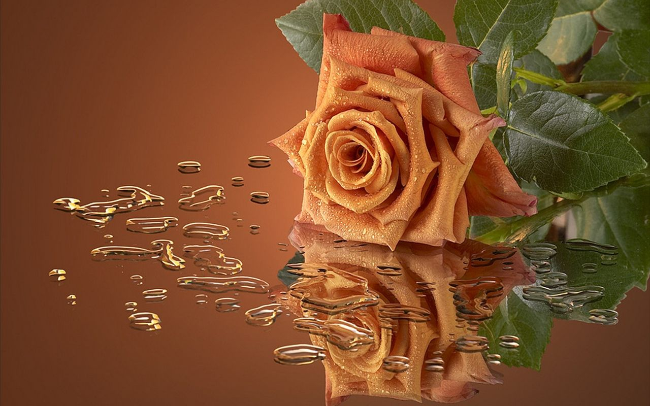 Открытка чайные розы
