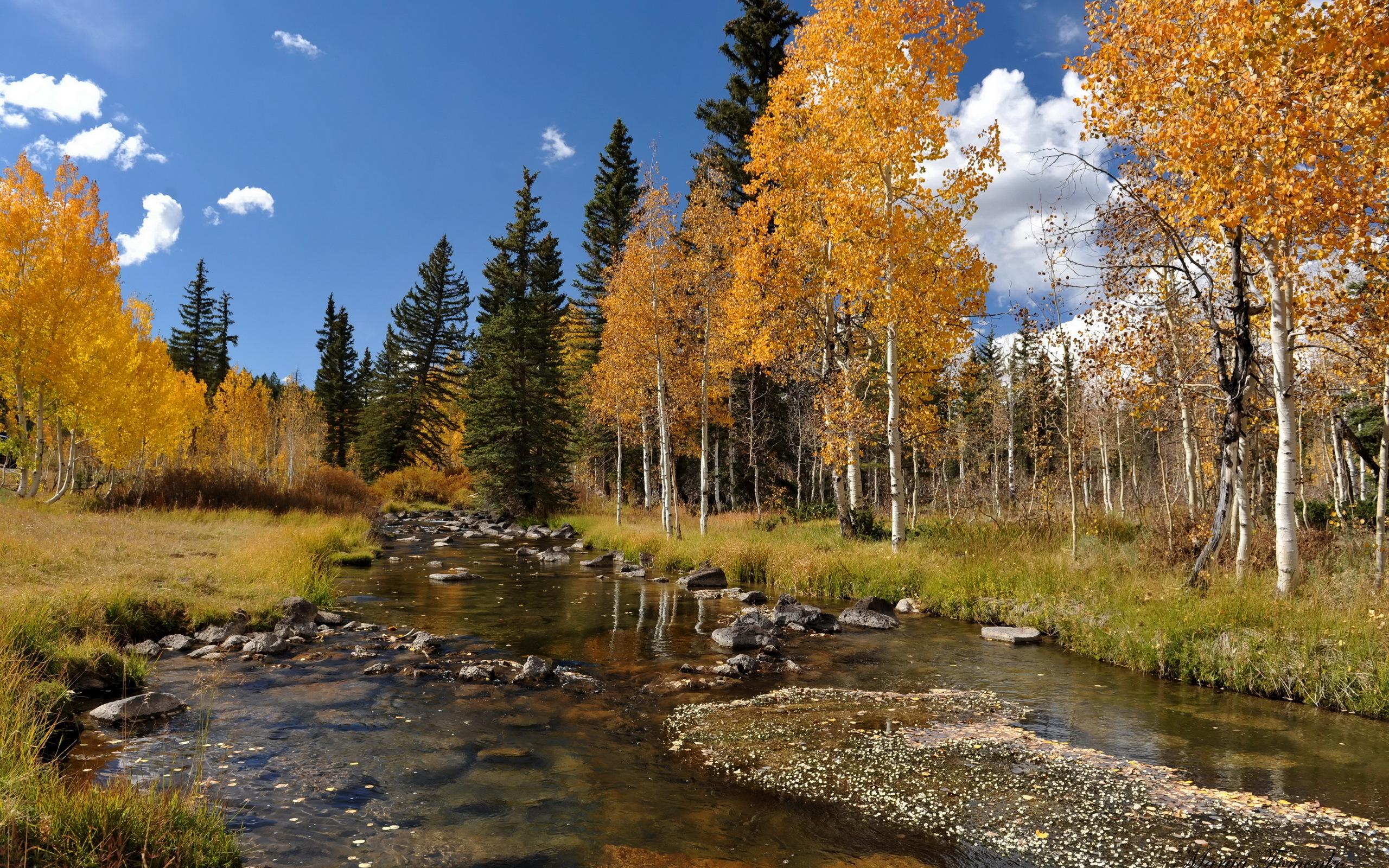 река осень деревья  № 3186364 бесплатно