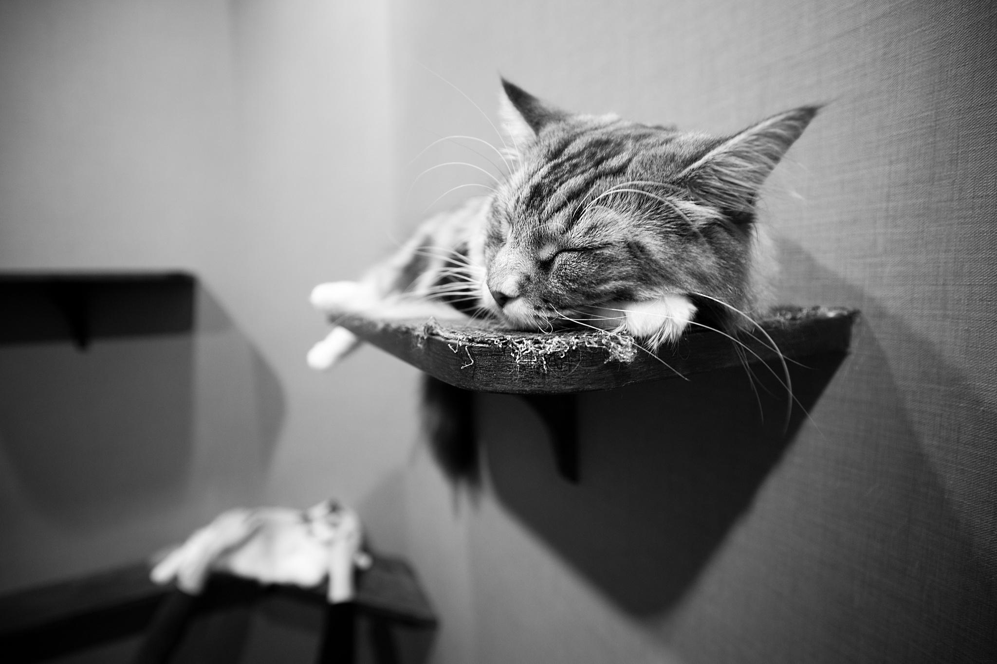 кот на полке cat on the shelf  № 1697970  скачать