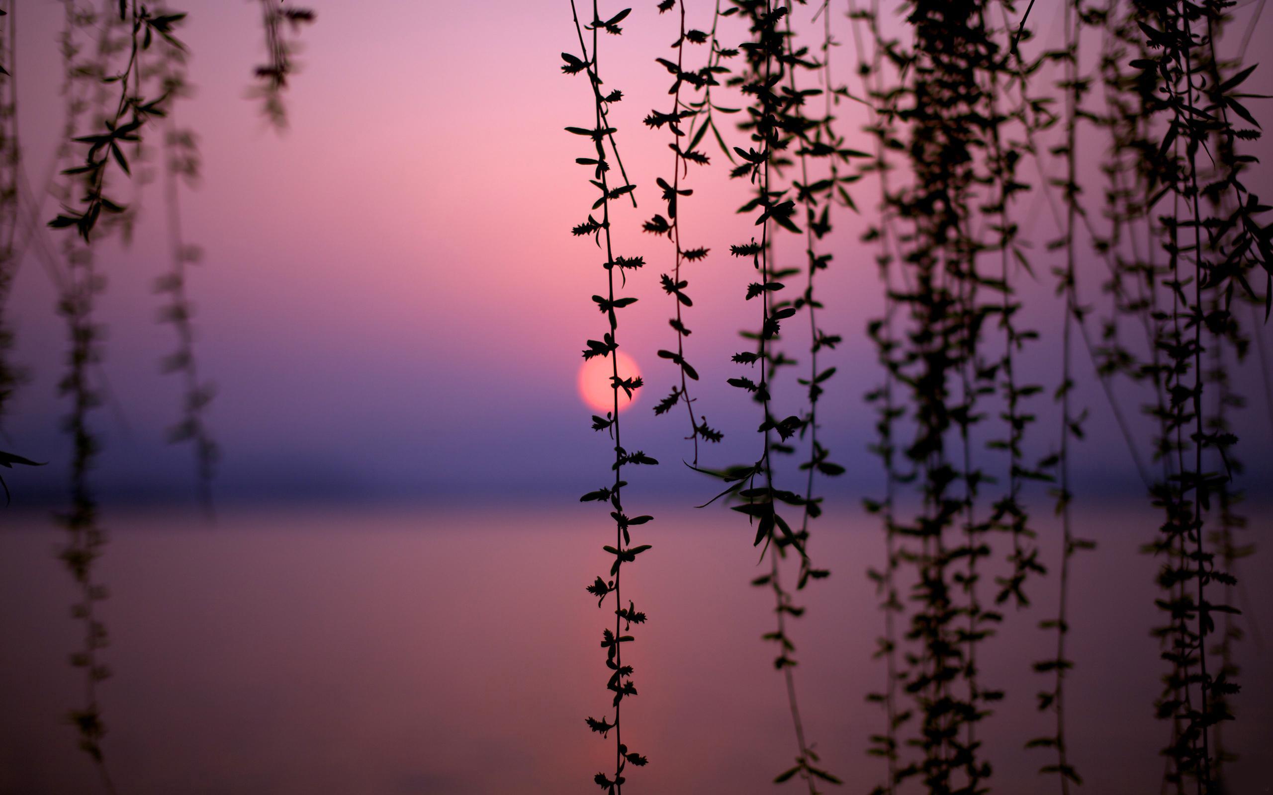 природа деревья ветки без смс