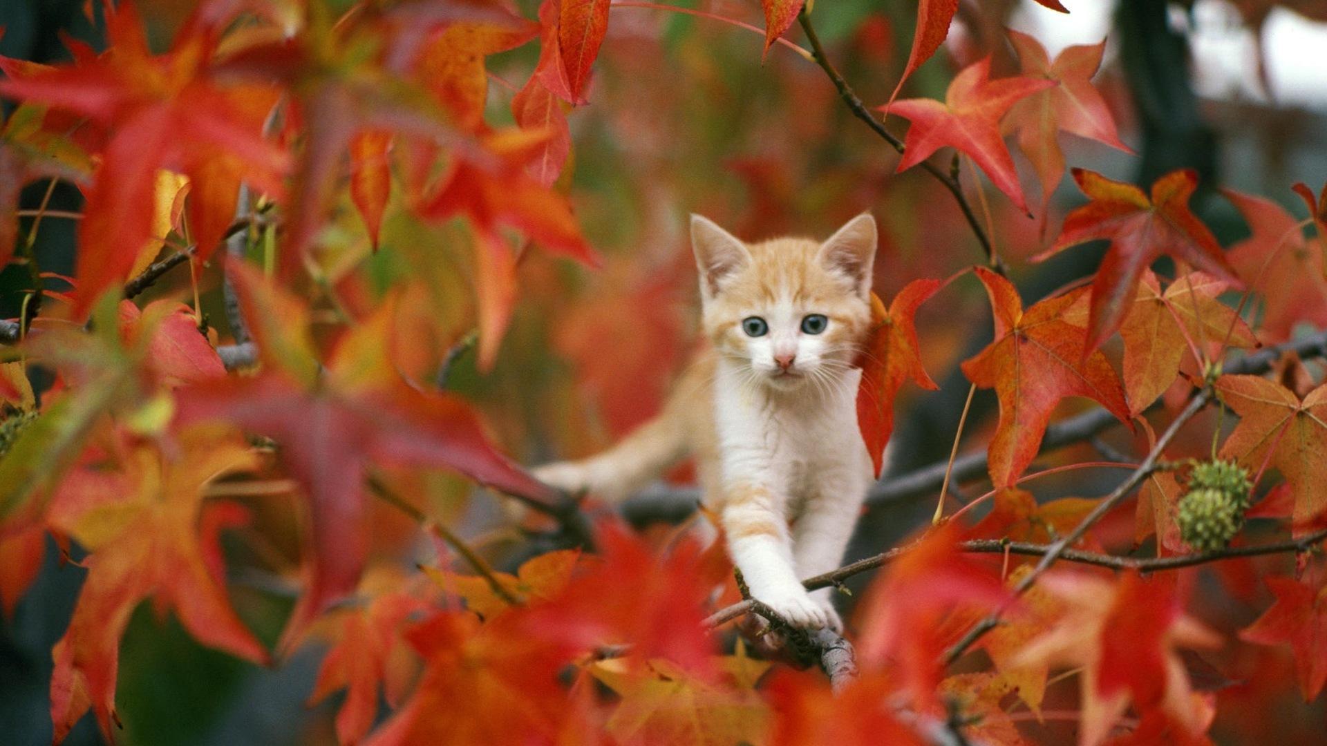кот деревья листья на телефон