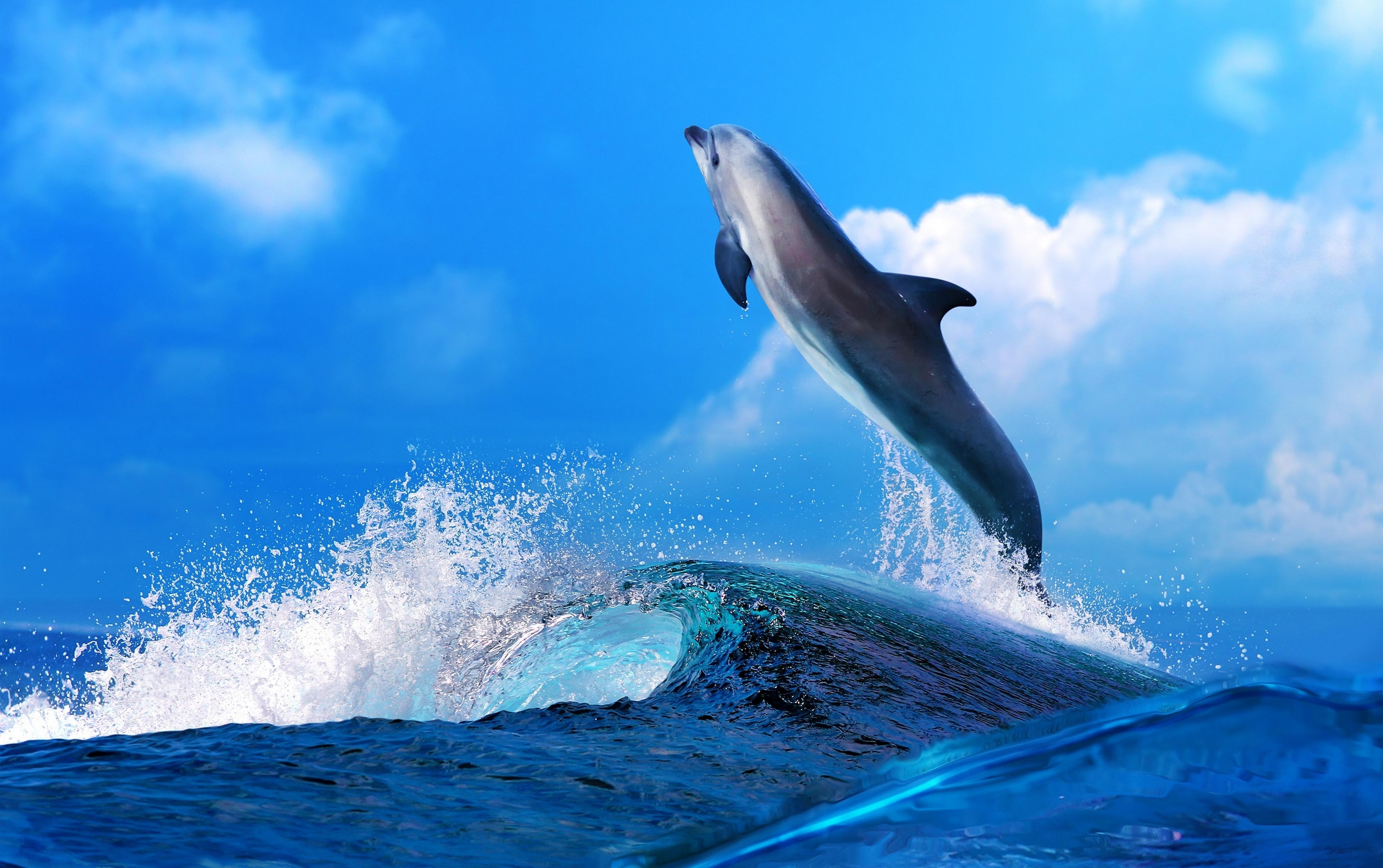 обои широкоформатные на рабочий стол бесплатно море и дельфины № 217005 бесплатно