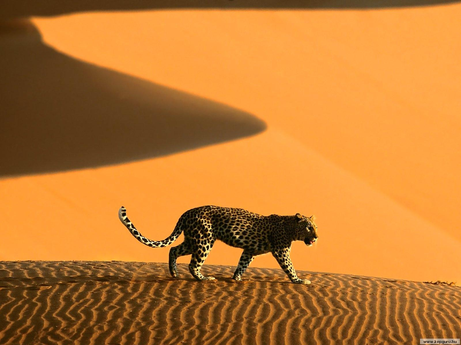 природа животные пустыня  № 3146309 без смс