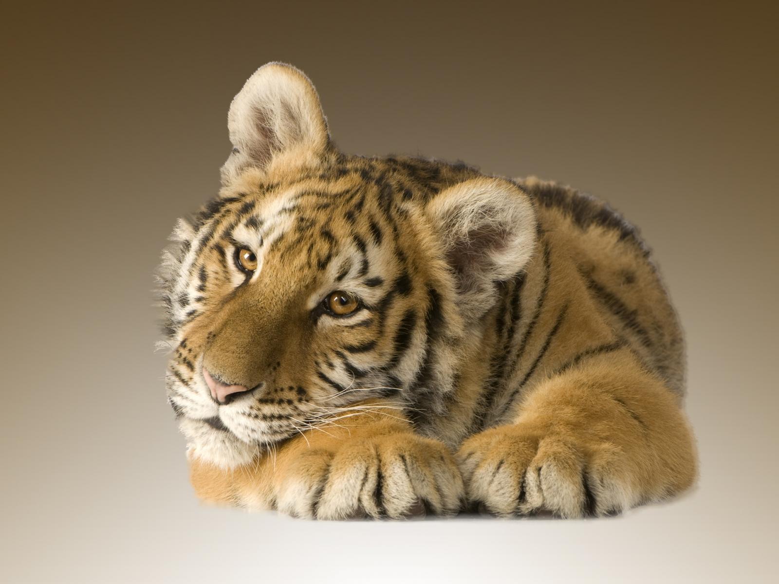 тигрятя без смс