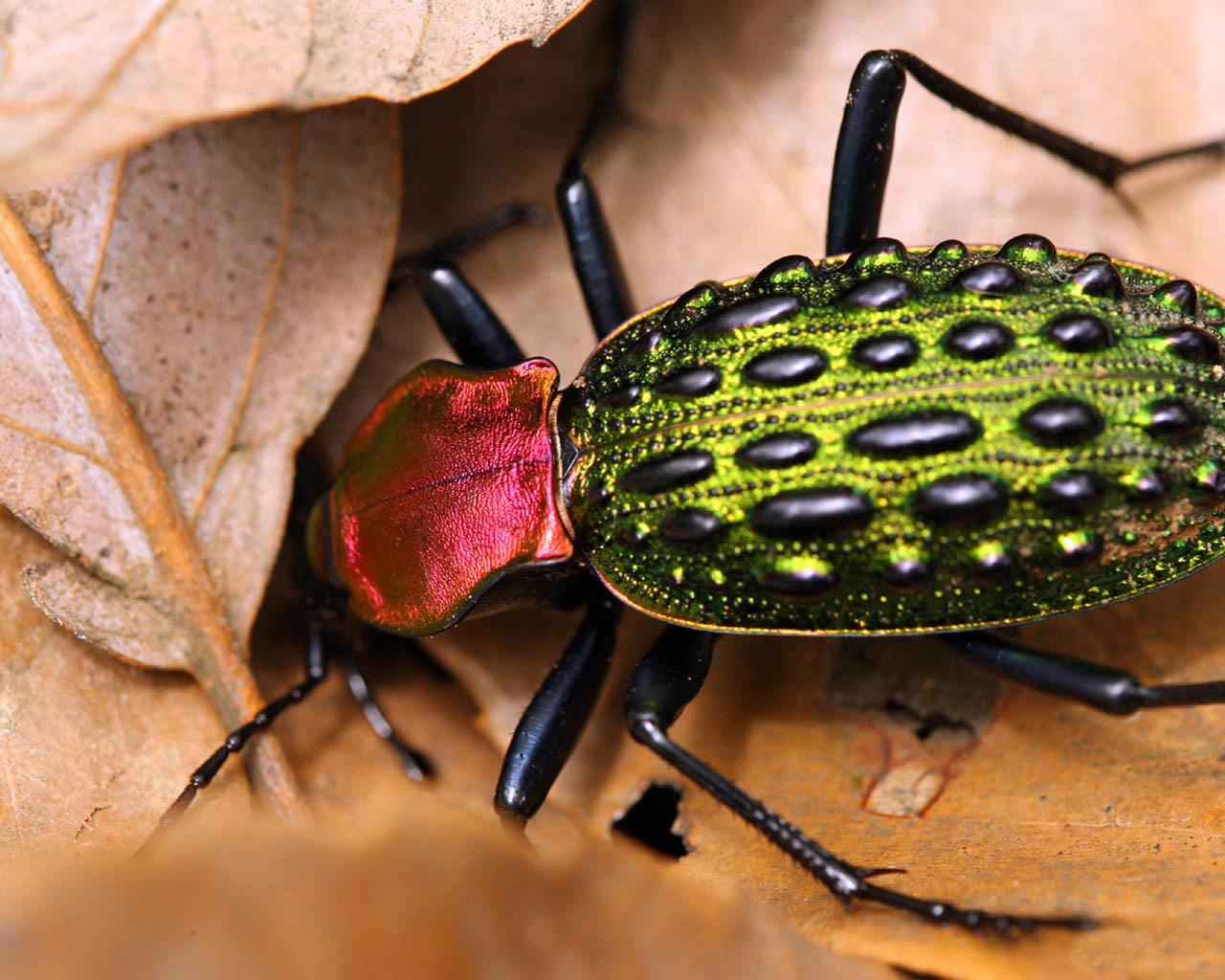 жуки насекомые фото
