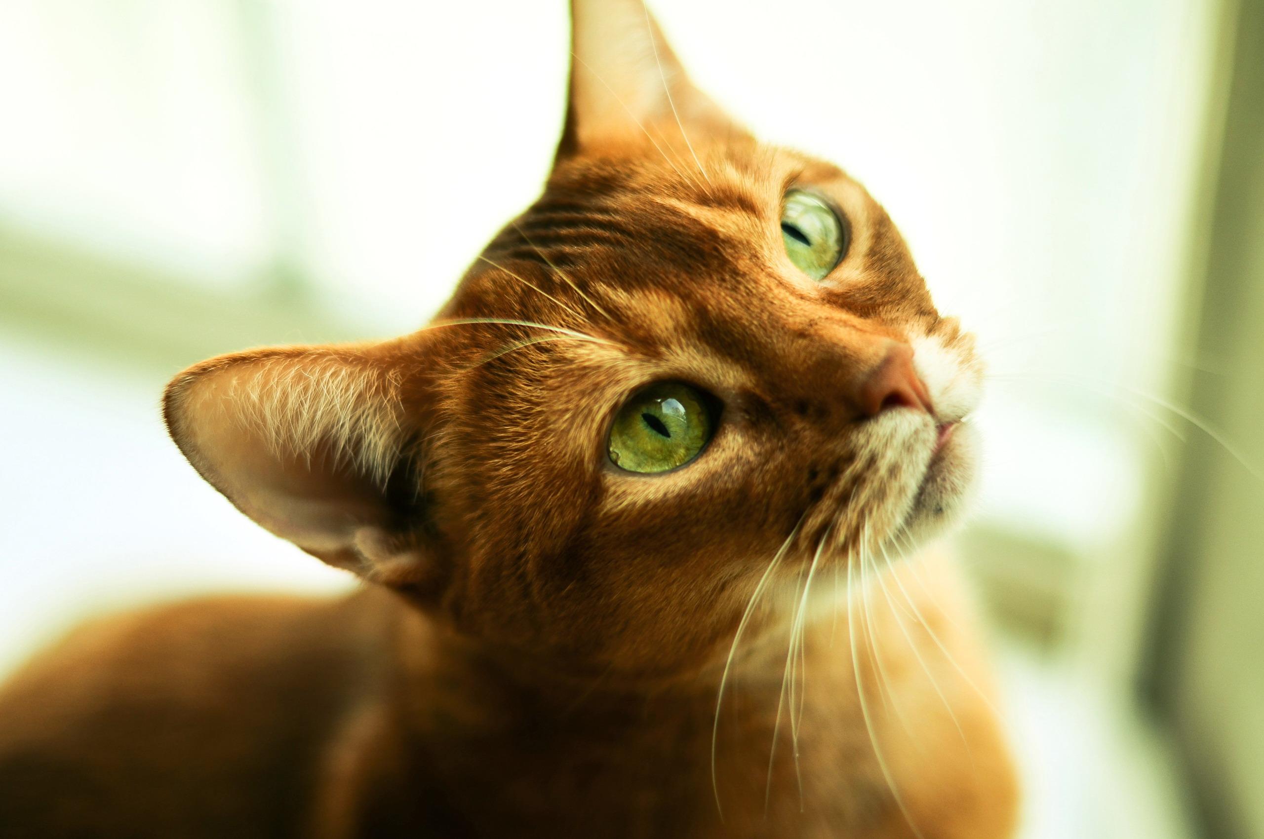 кошка зеленые глаза постель  № 3655501 загрузить
