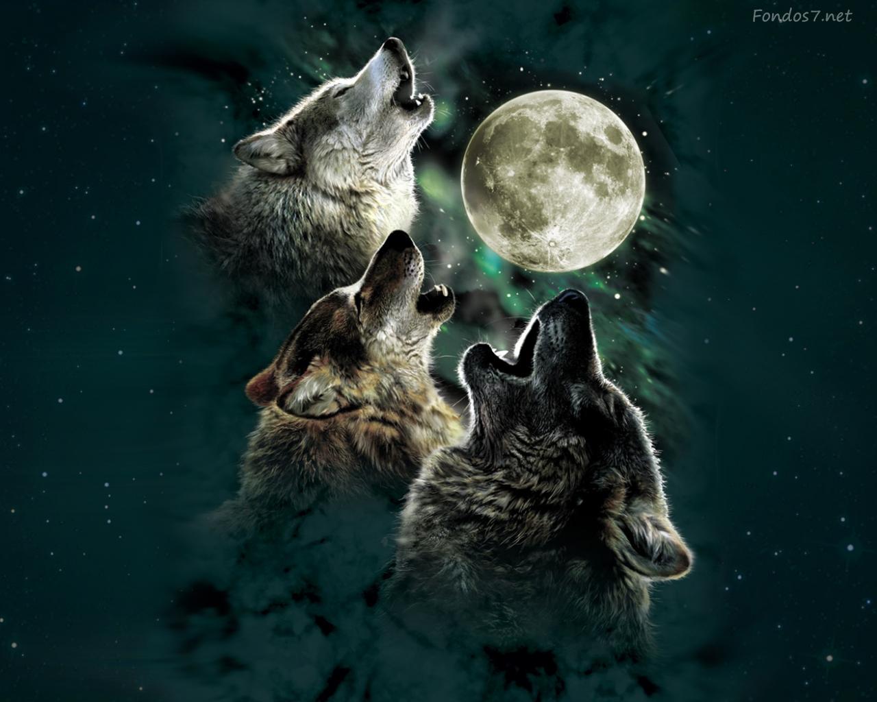 Обои волки. Животные foto 10