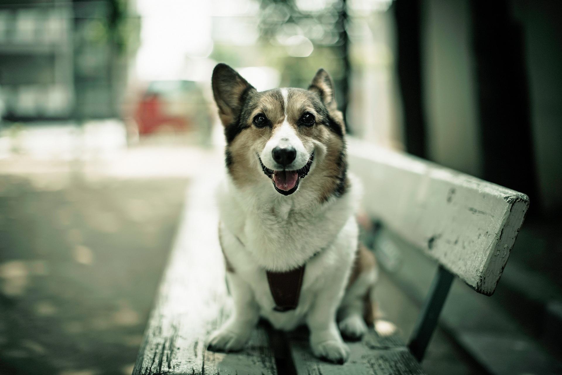 животное собака мару  № 2018191 загрузить