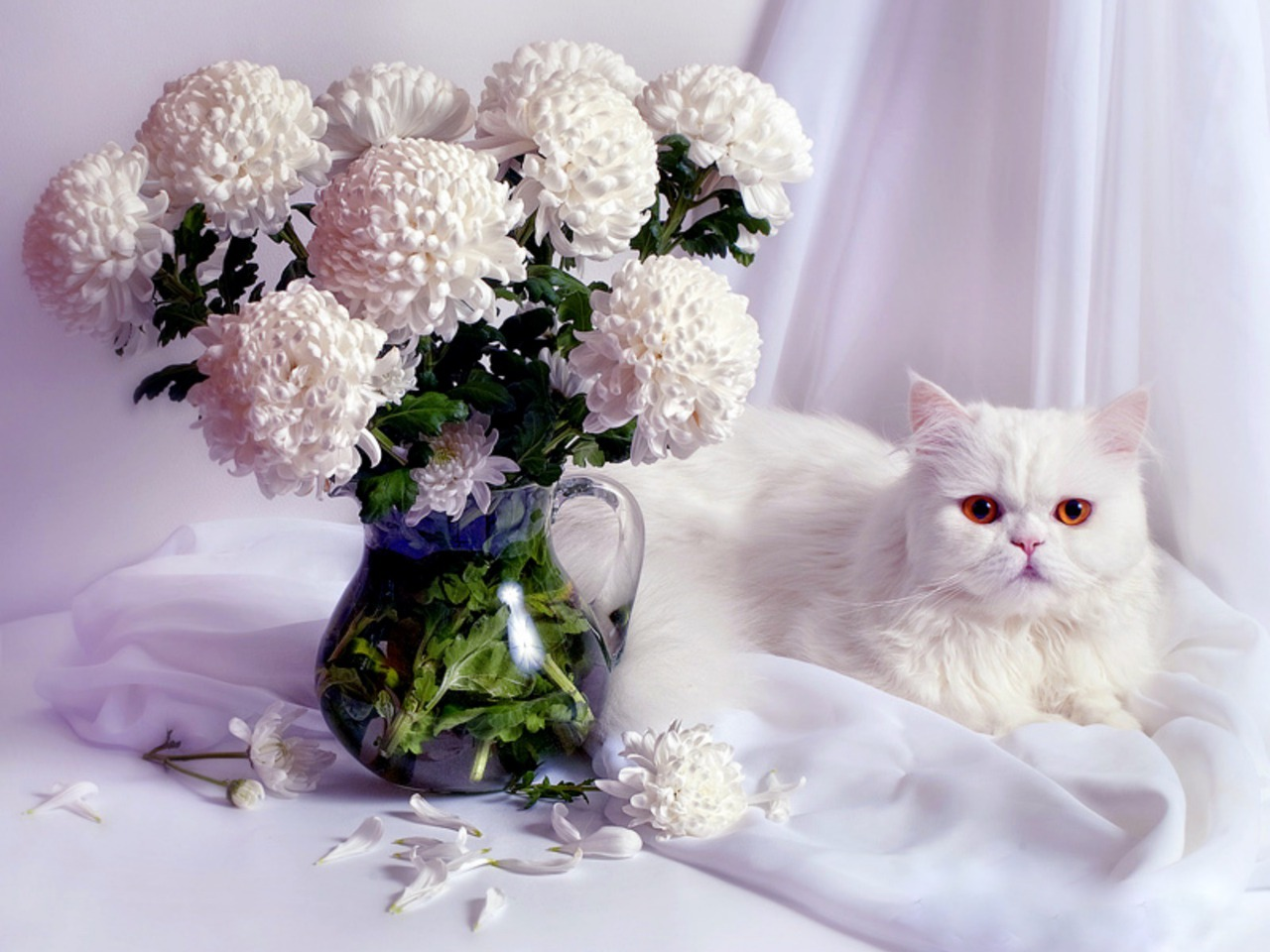 Кошки картинка