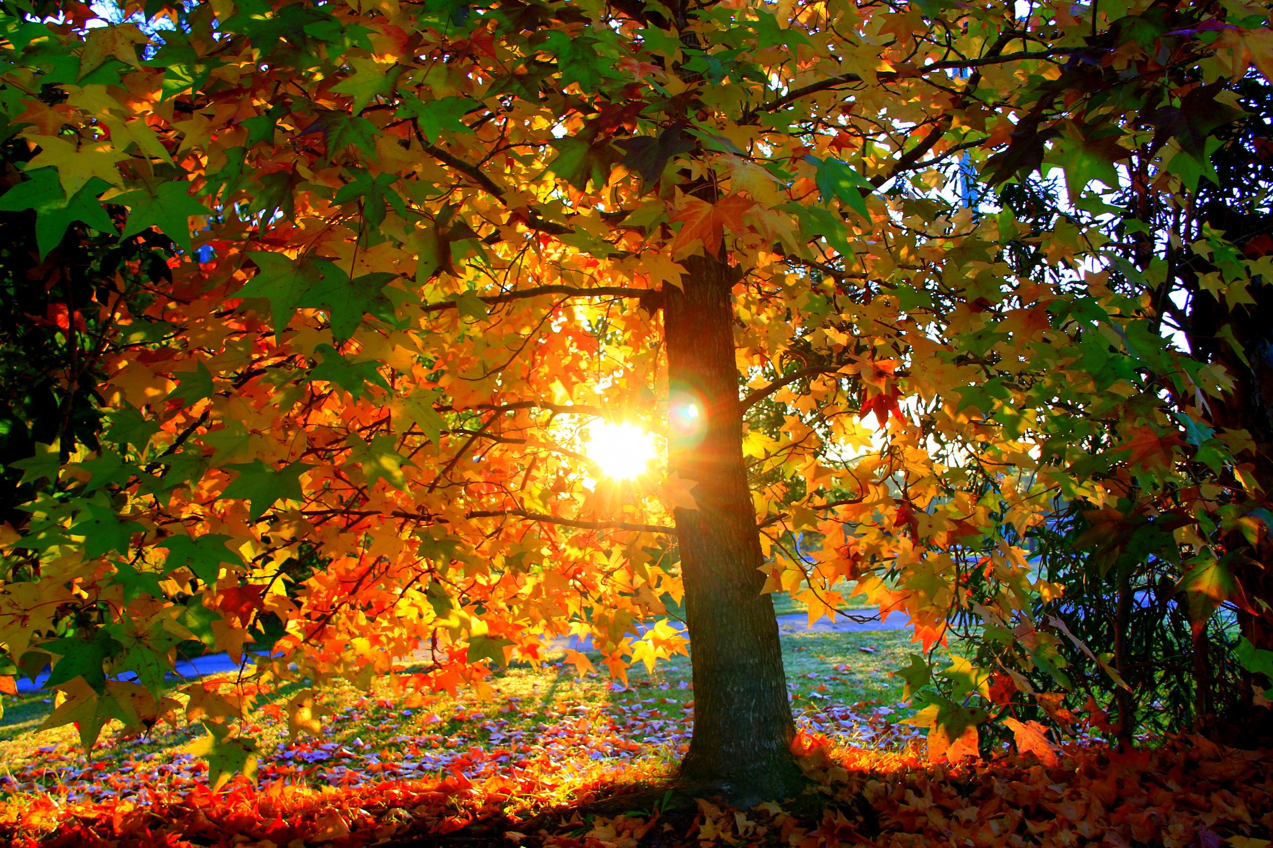 деревья листва осень солнце  № 3191803 загрузить