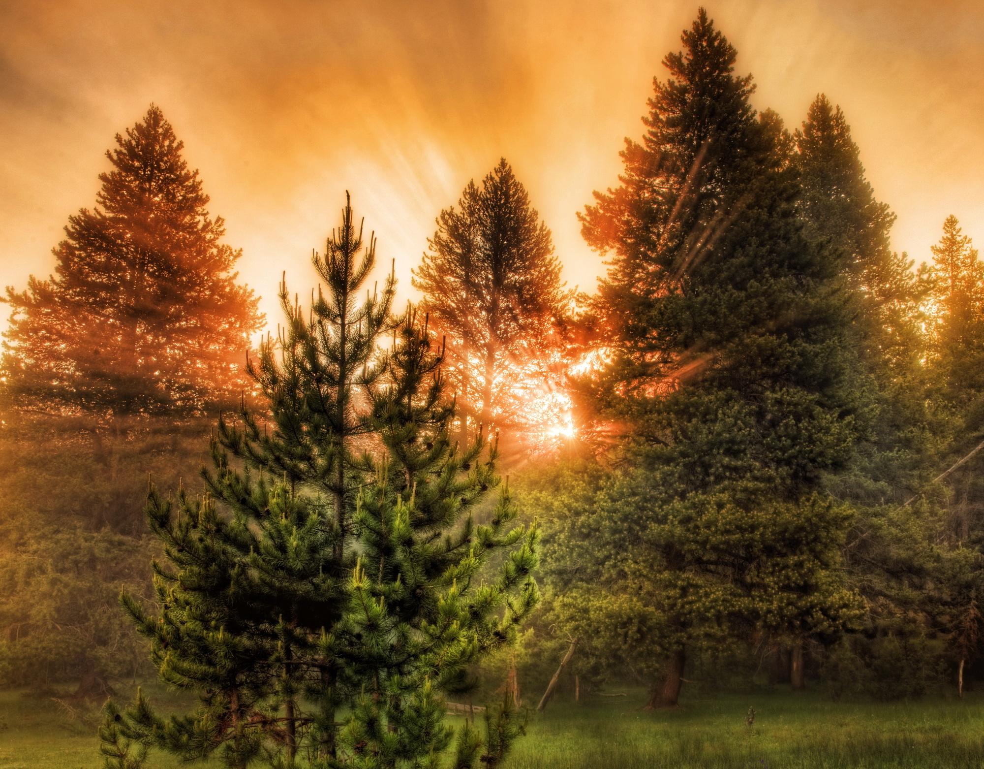 Восход солнца на окраине леса  № 1409540  скачать