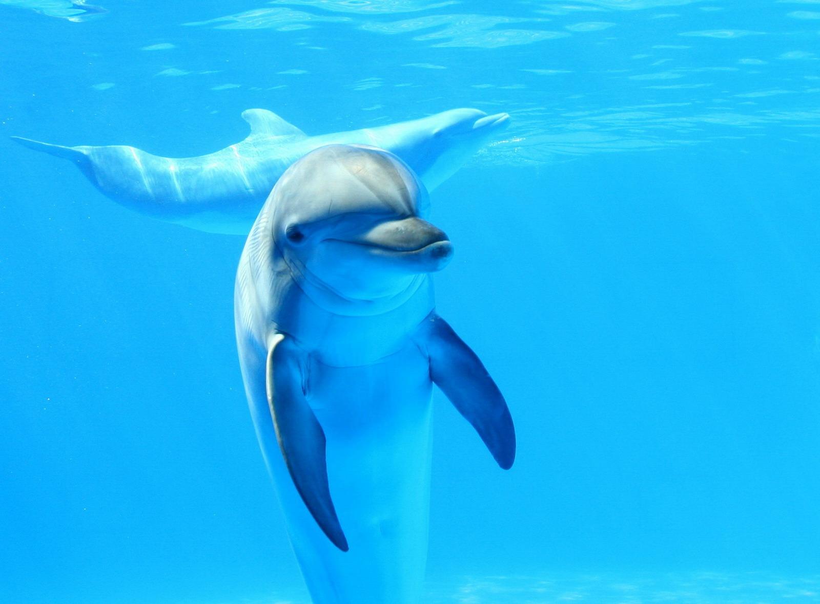Чувствуя болезнь, дельфин...