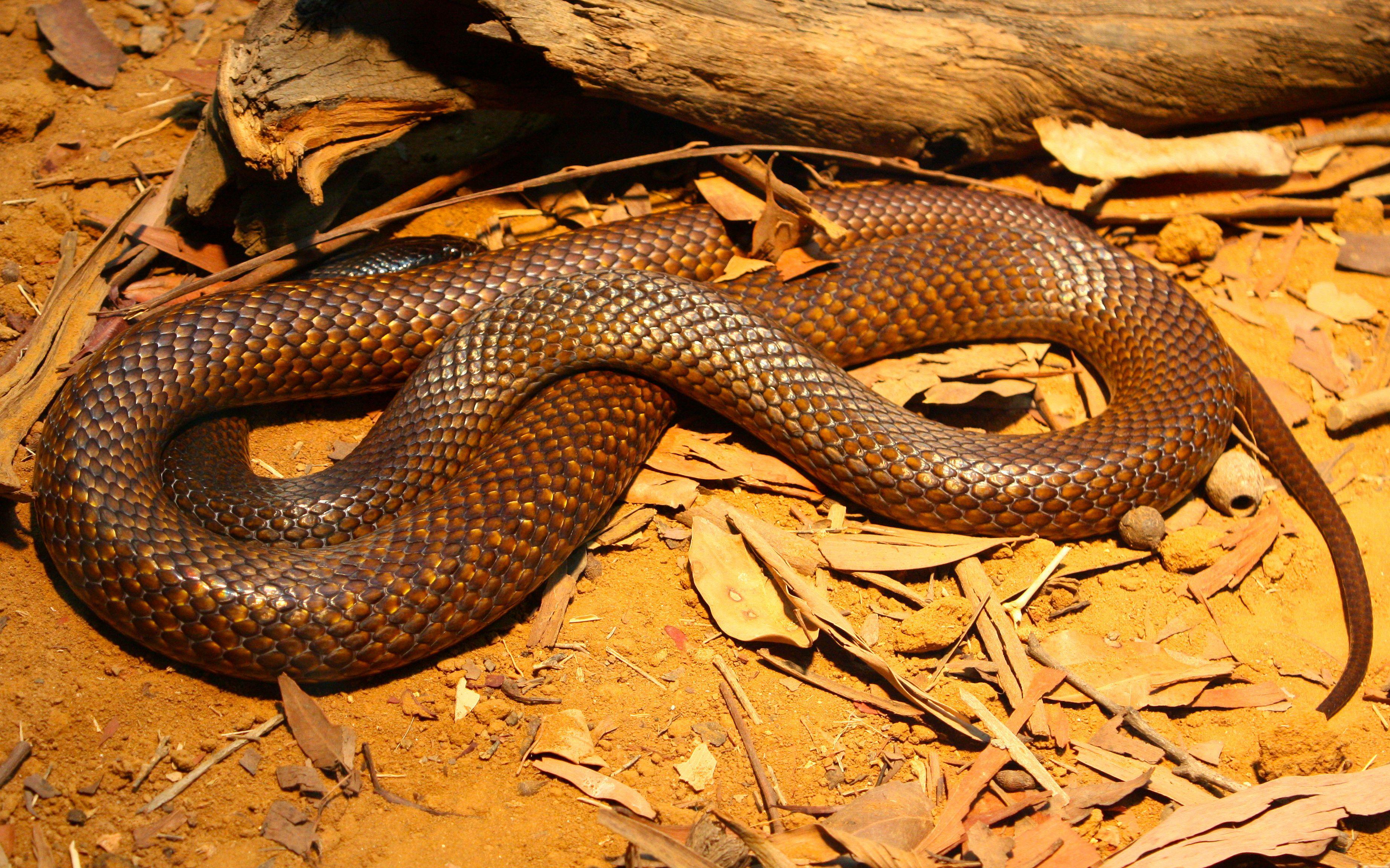 картинки змеи: