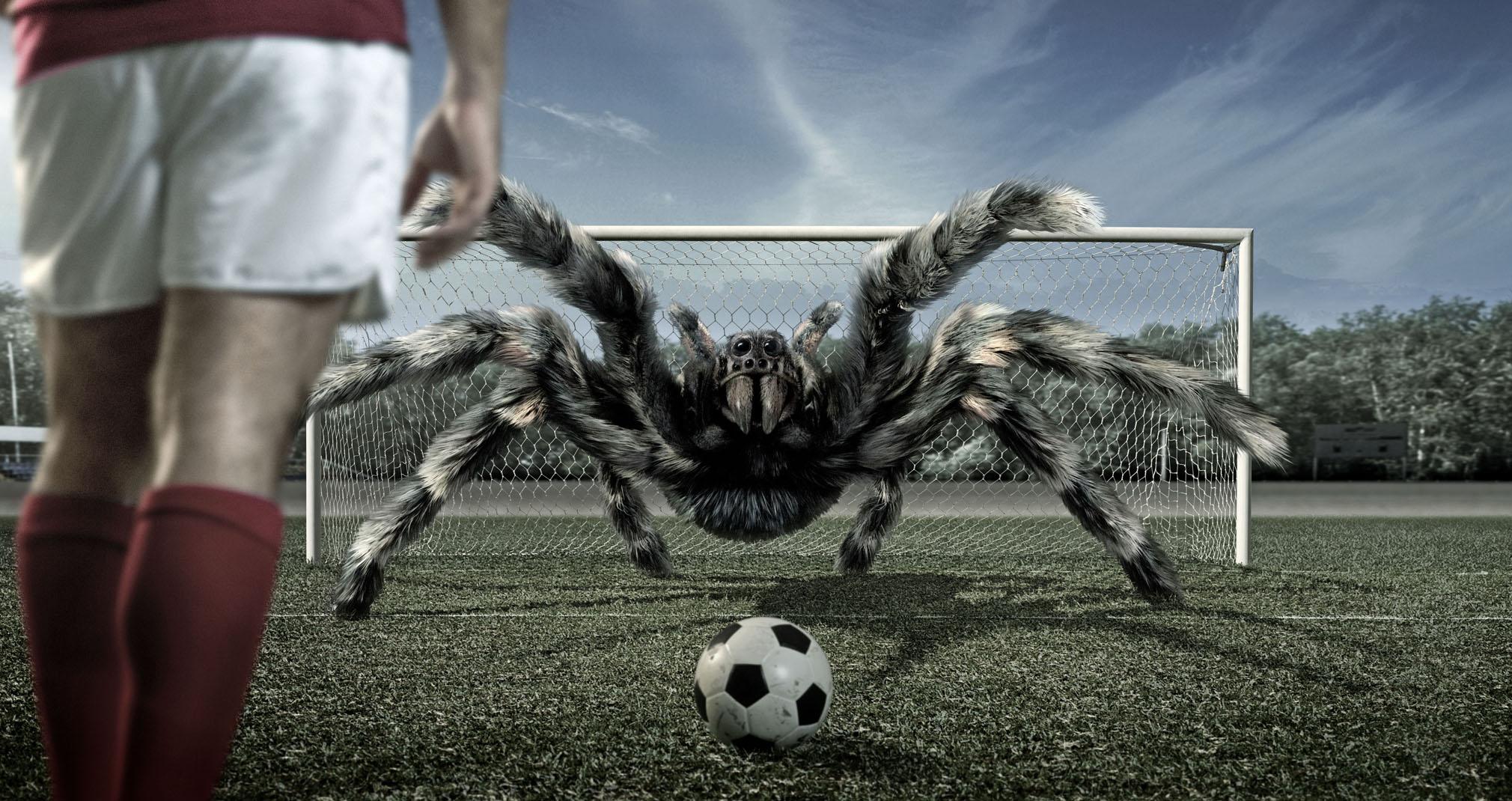 Звериный футбол  № 3148799 загрузить