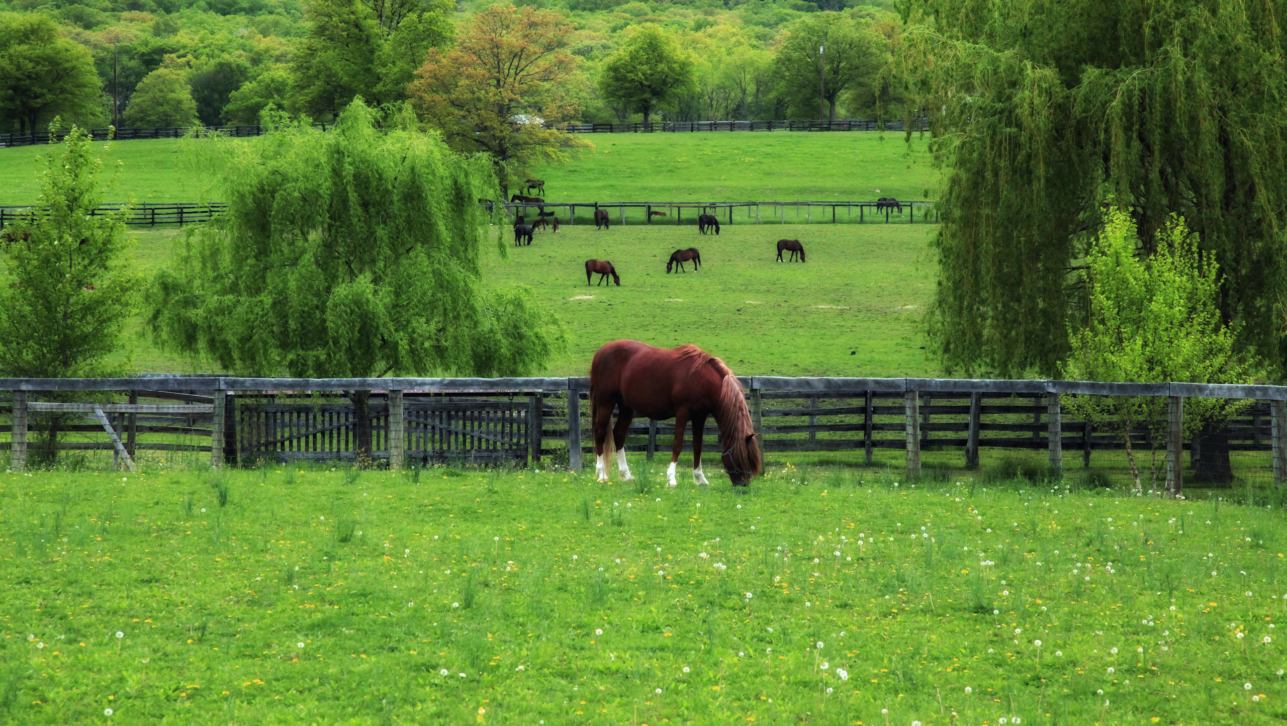 Лошади в поле бесплатно