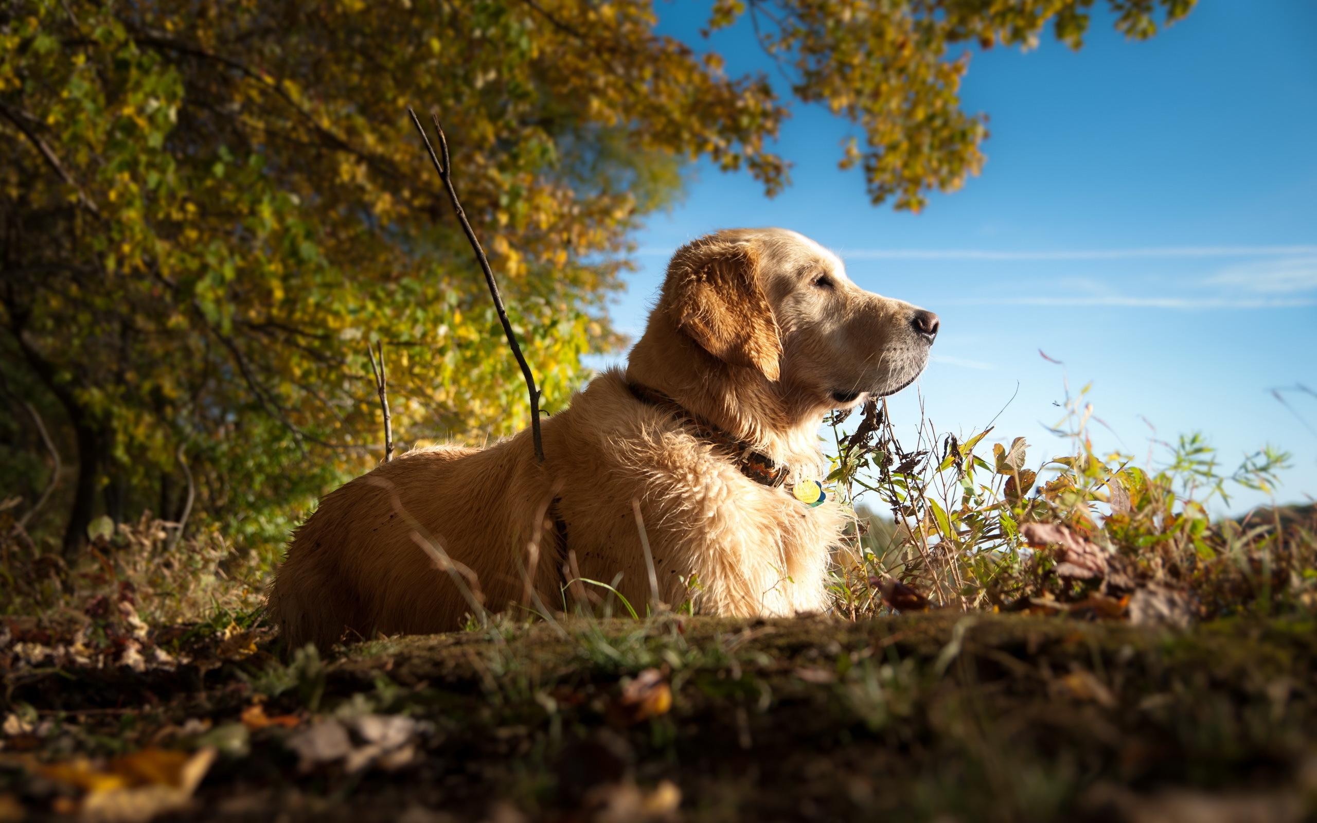 собака животное природа  № 690788 бесплатно