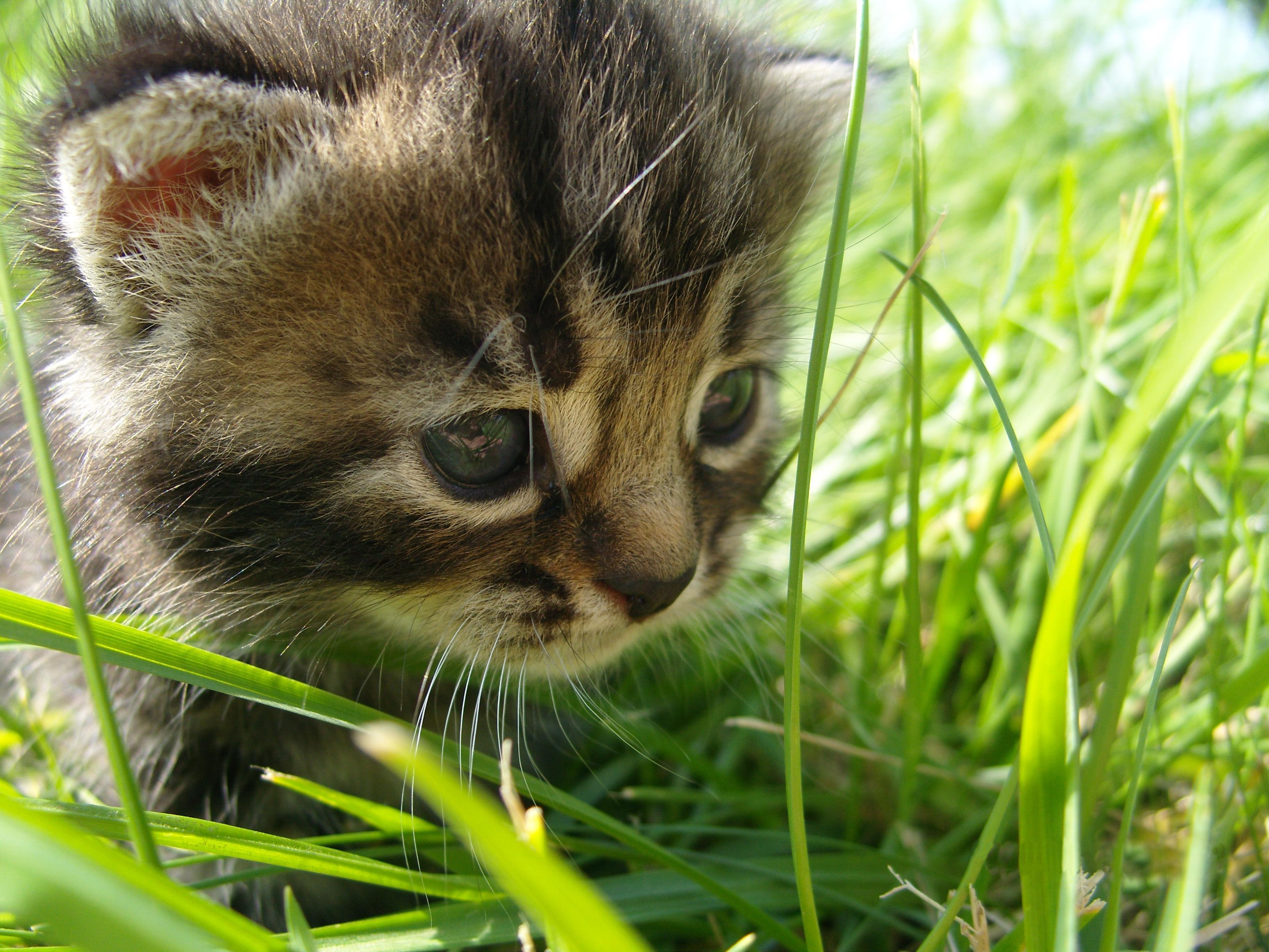 природа животные котята коты  № 1999735 загрузить