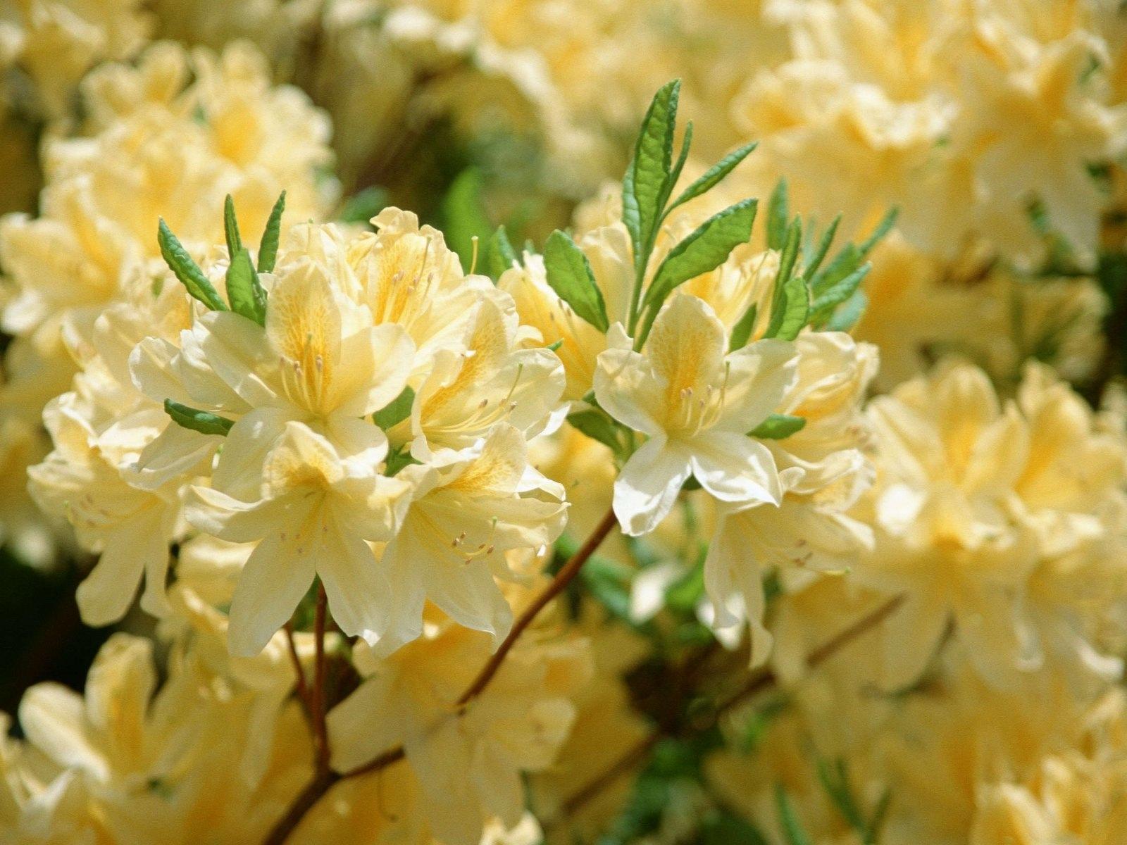 Желтый распустившийся цветок  № 731701 бесплатно