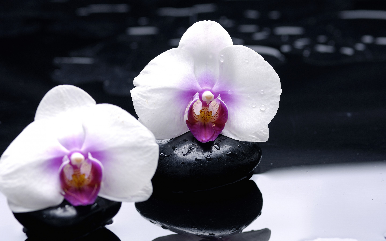 Цветок, черные камни, стебли загрузить