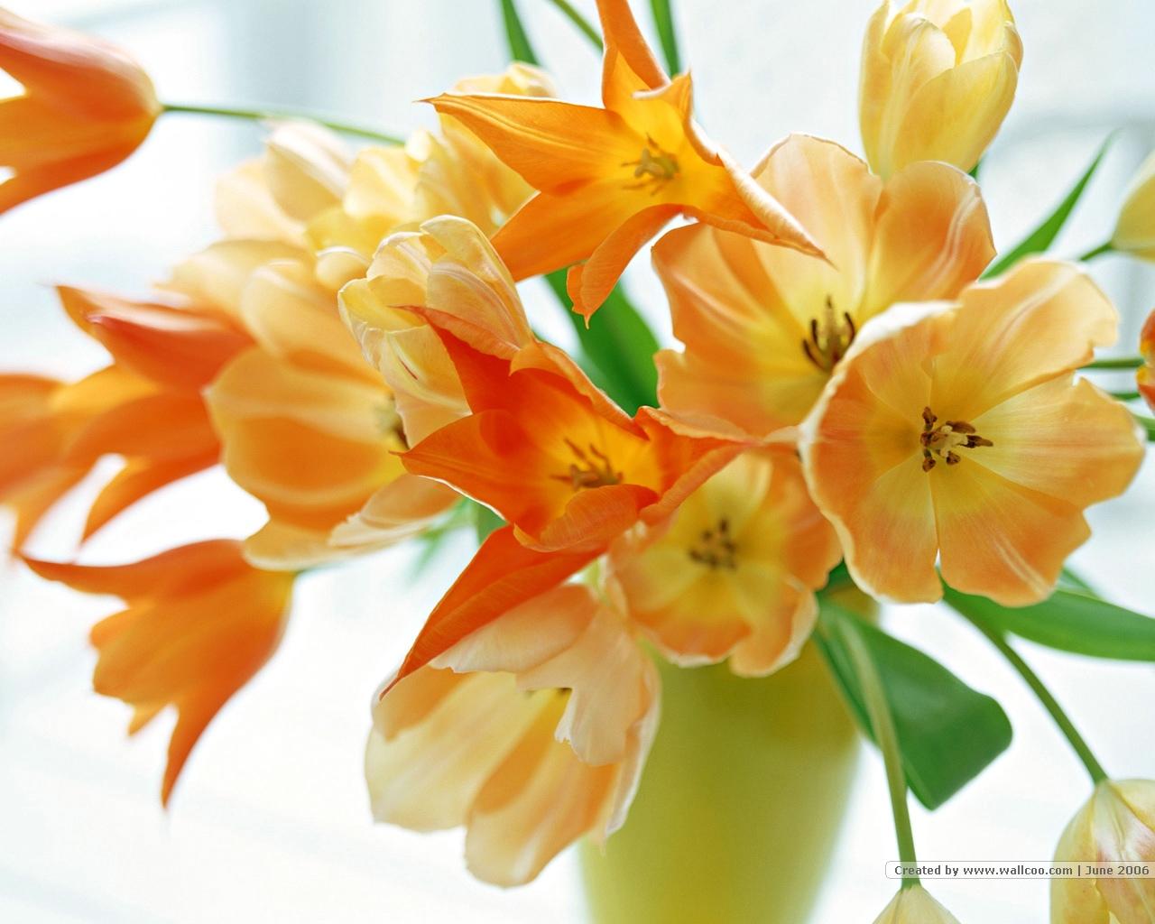 Автоцентр АНТ - официальный дилер HYUNDAI рад поздравить всех женщин с замечательным праздником 8 марта!