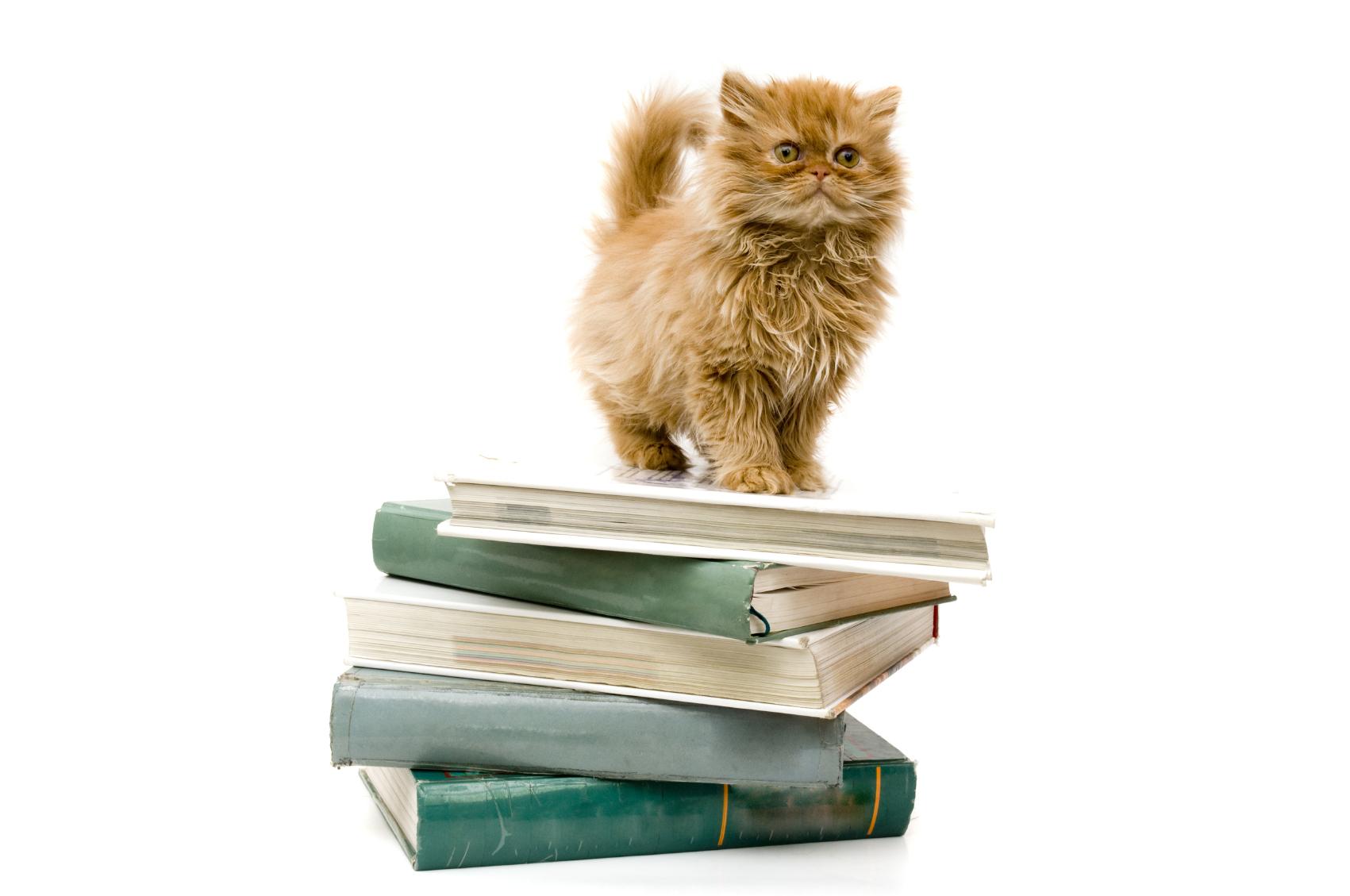 Котенок с книгой бесплатно