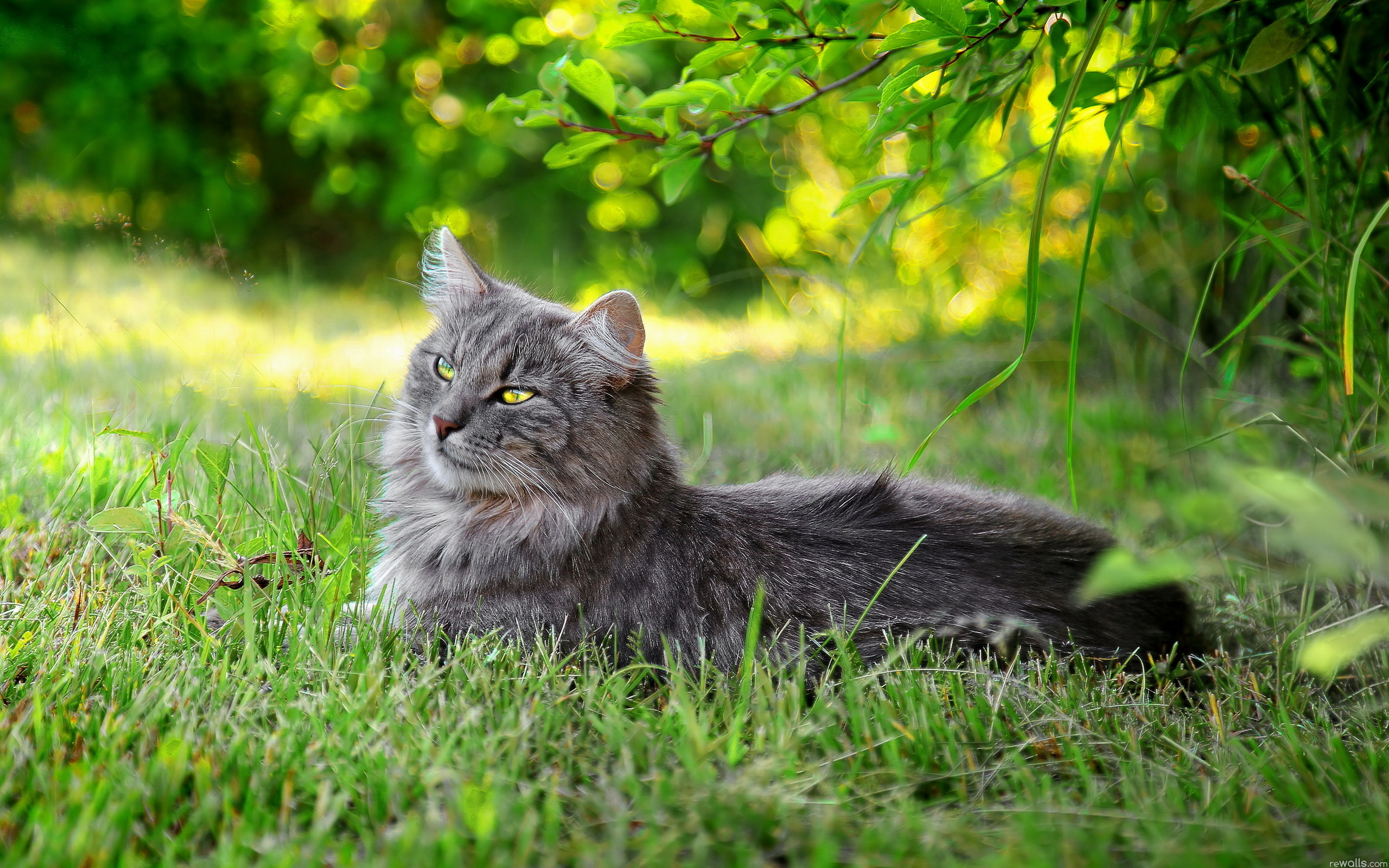 Кот в лесу в траве бесплатно