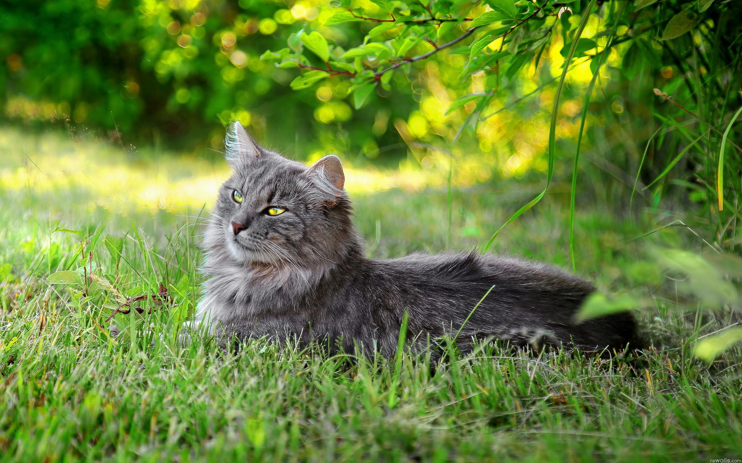Котенок на травке  № 2954270 бесплатно