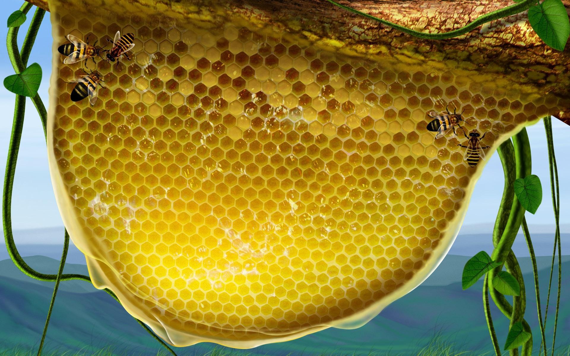Мёд в сотах  № 604459 загрузить