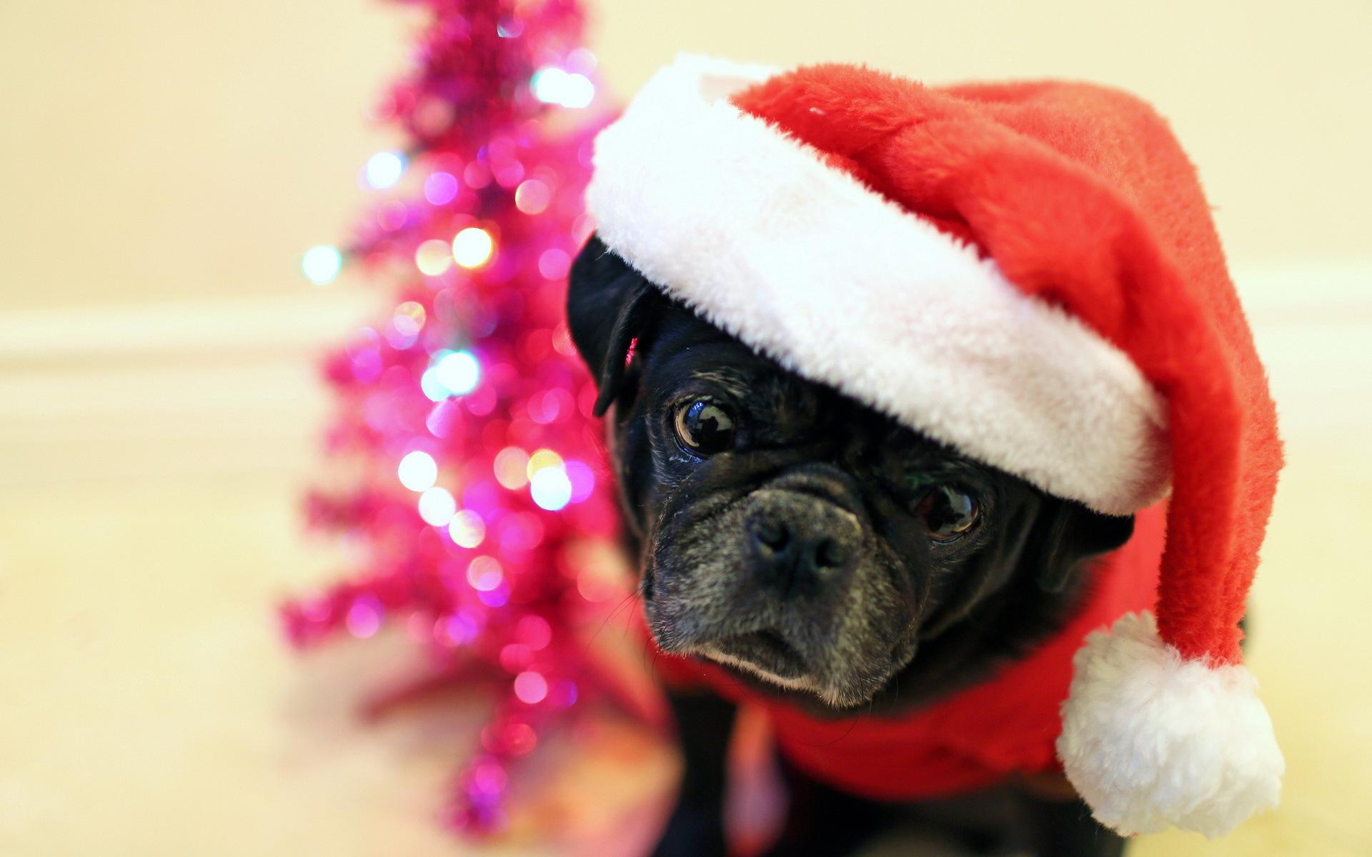 собачка в новогодней шапочке  № 1301898  скачать
