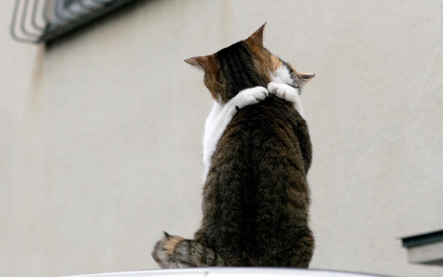 Картинки с обнимашками коты