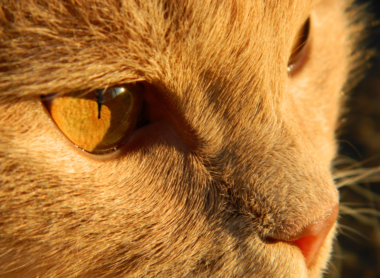 кошка глаза шерсть  № 1963580  скачать