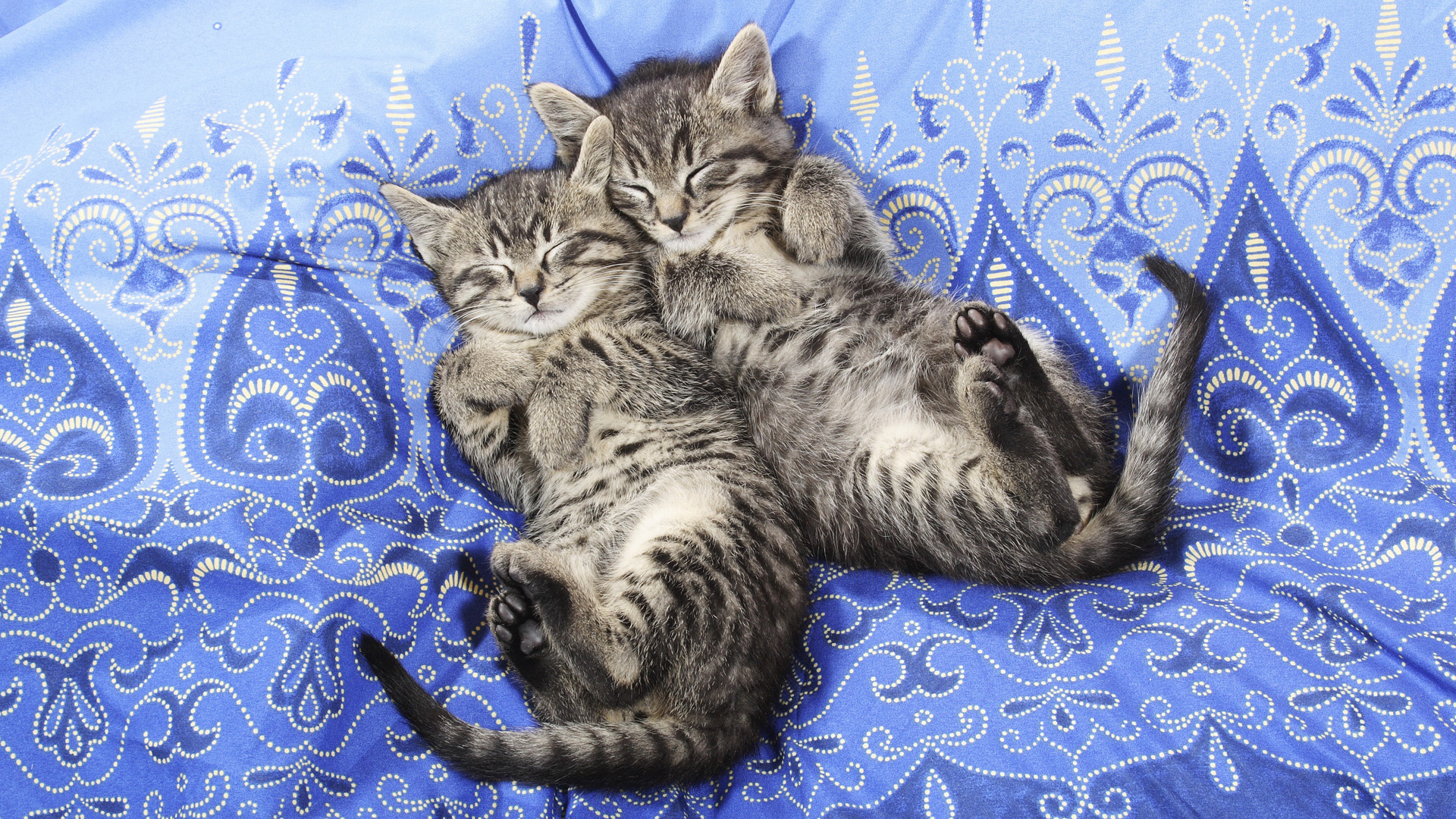котята сон бесплатно