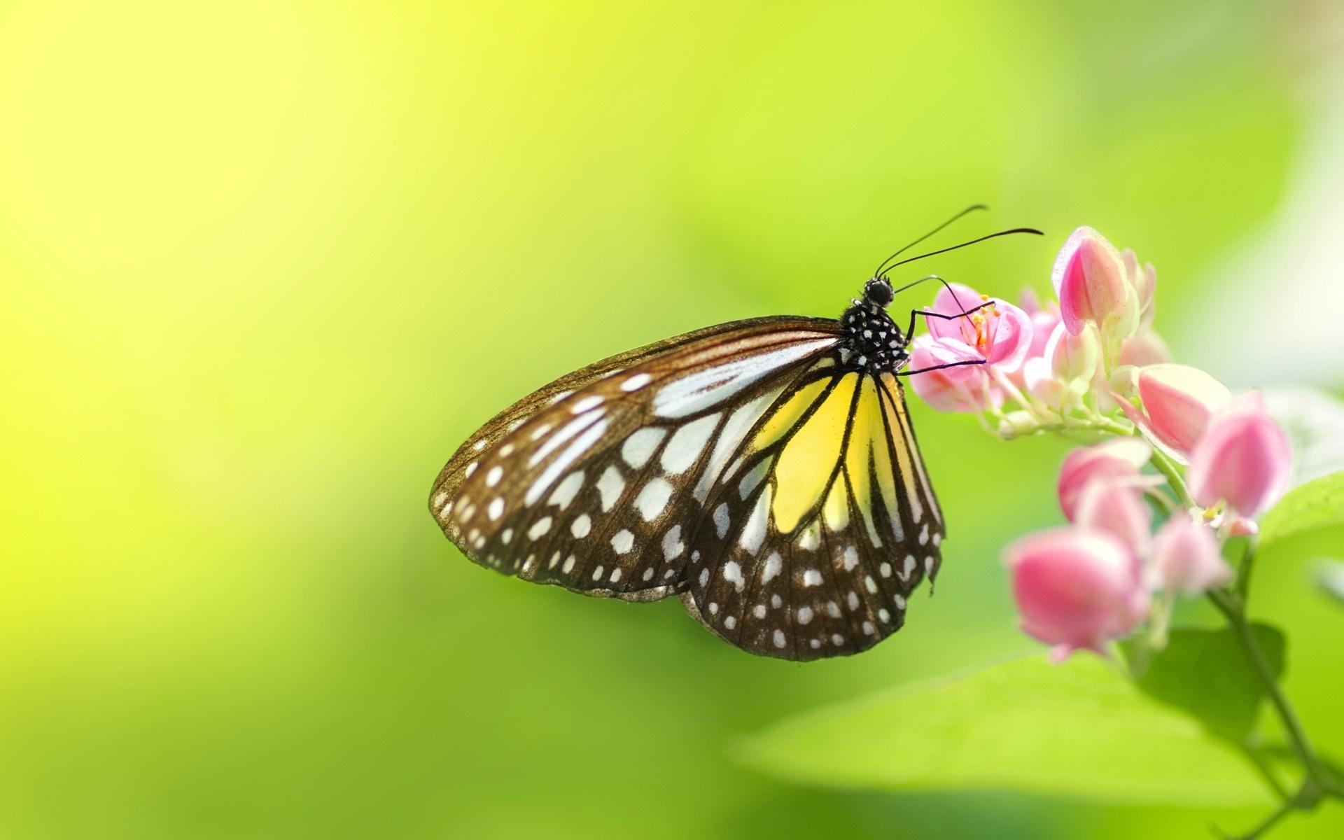 насекомое цветок скачать